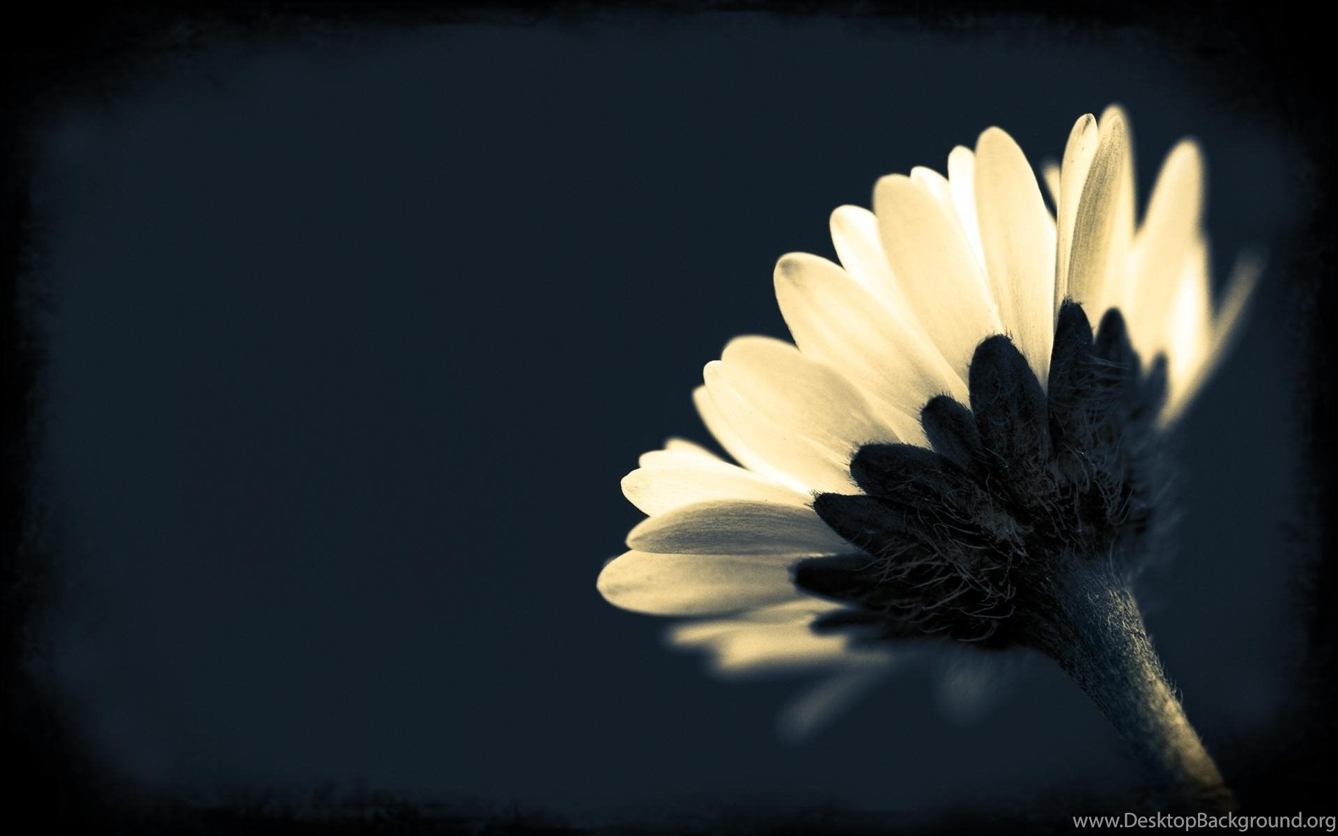 Black And White Flowers Wallpapers Hd Wallpapers Lovely Desktop
