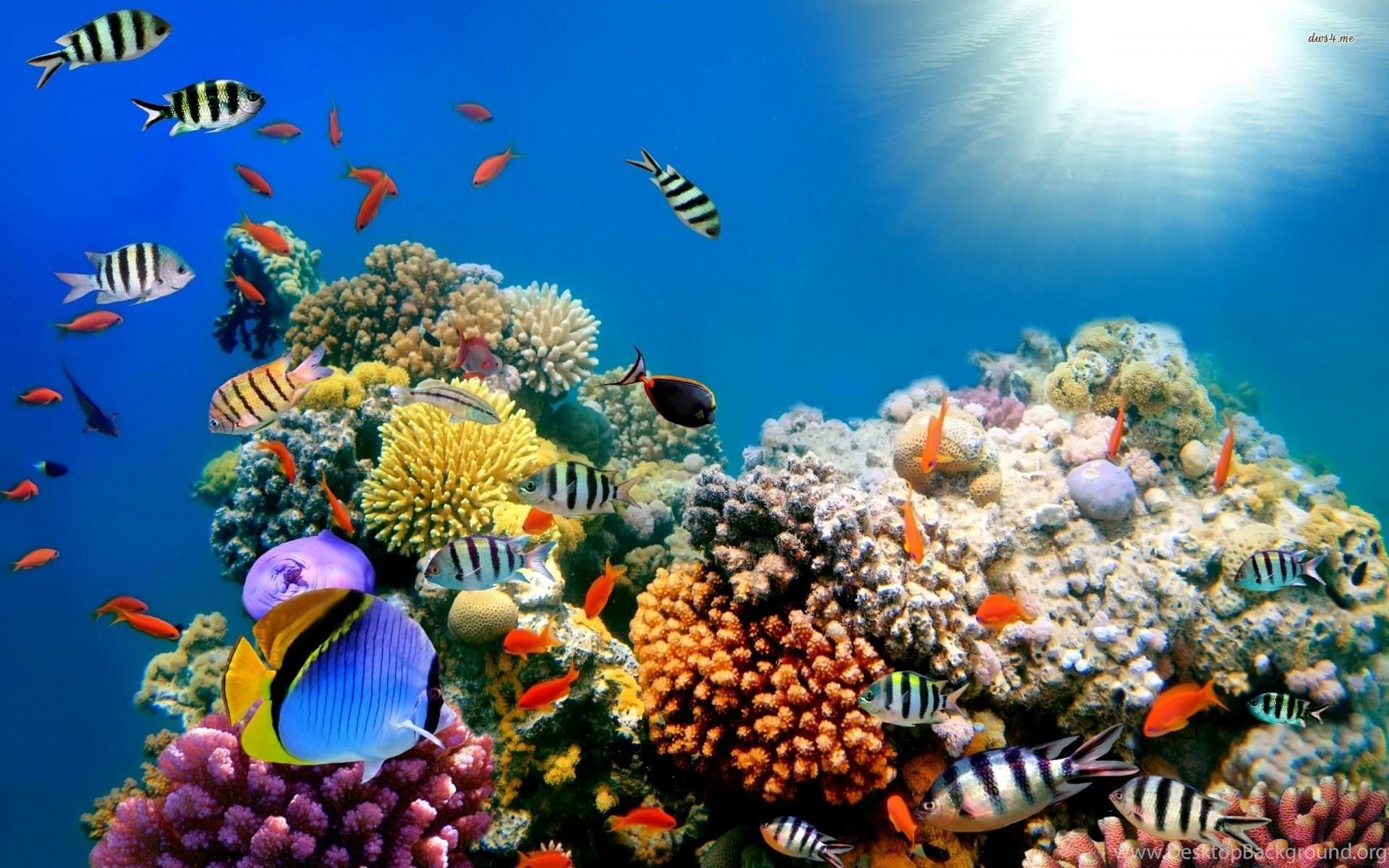 underwater coral reef desktop backgrounds hd wallpapers