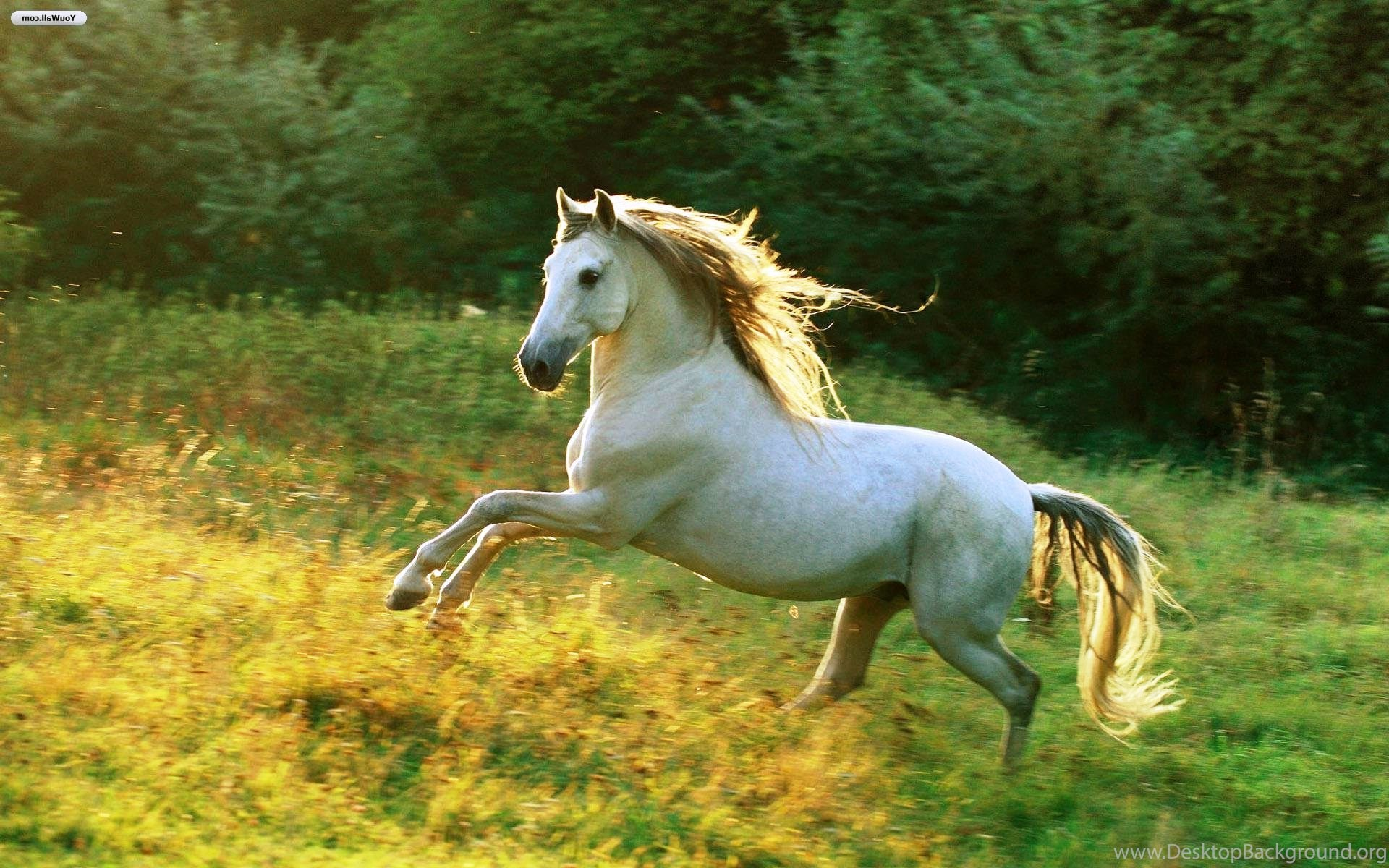 White running horses - photo#29