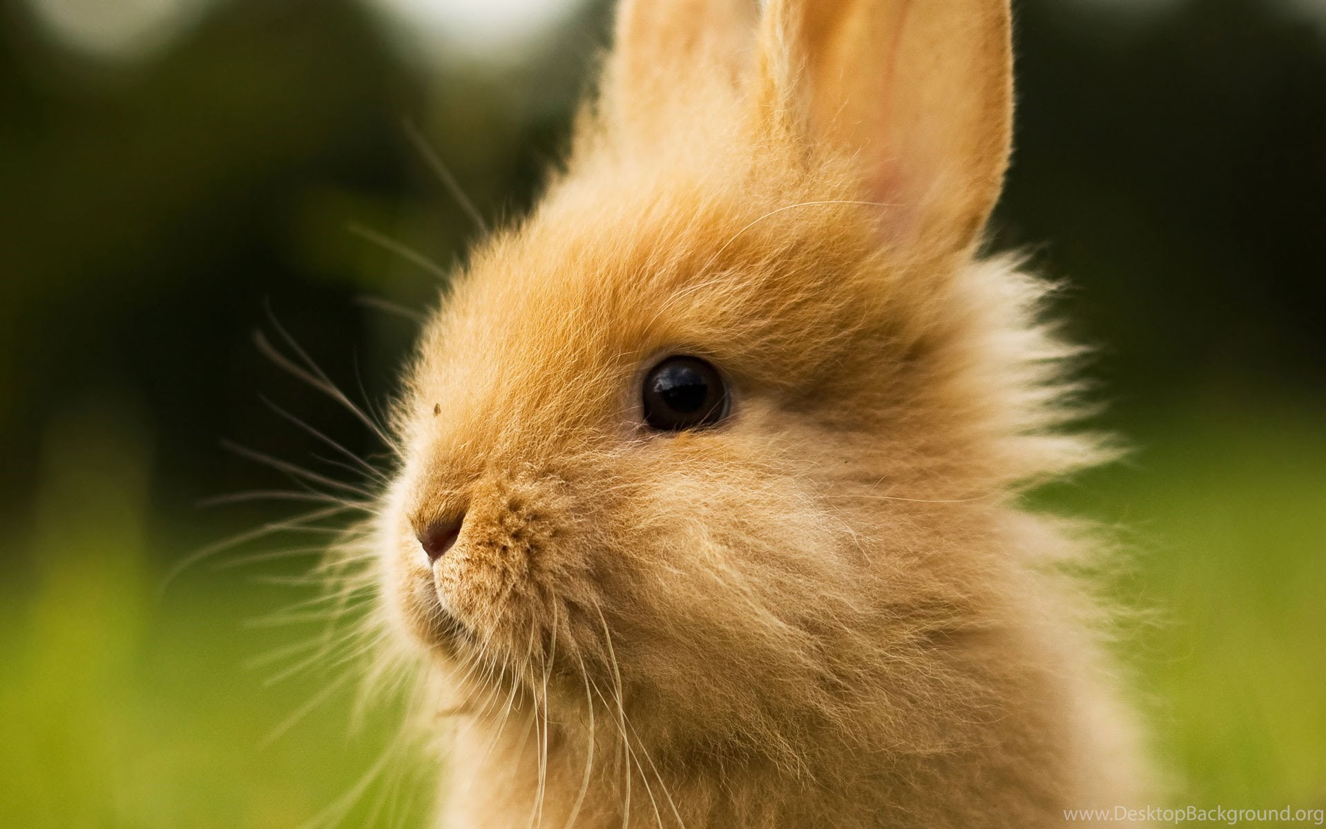 Best New Cute Rabbit Wallpapers Hd For Iphone Best High