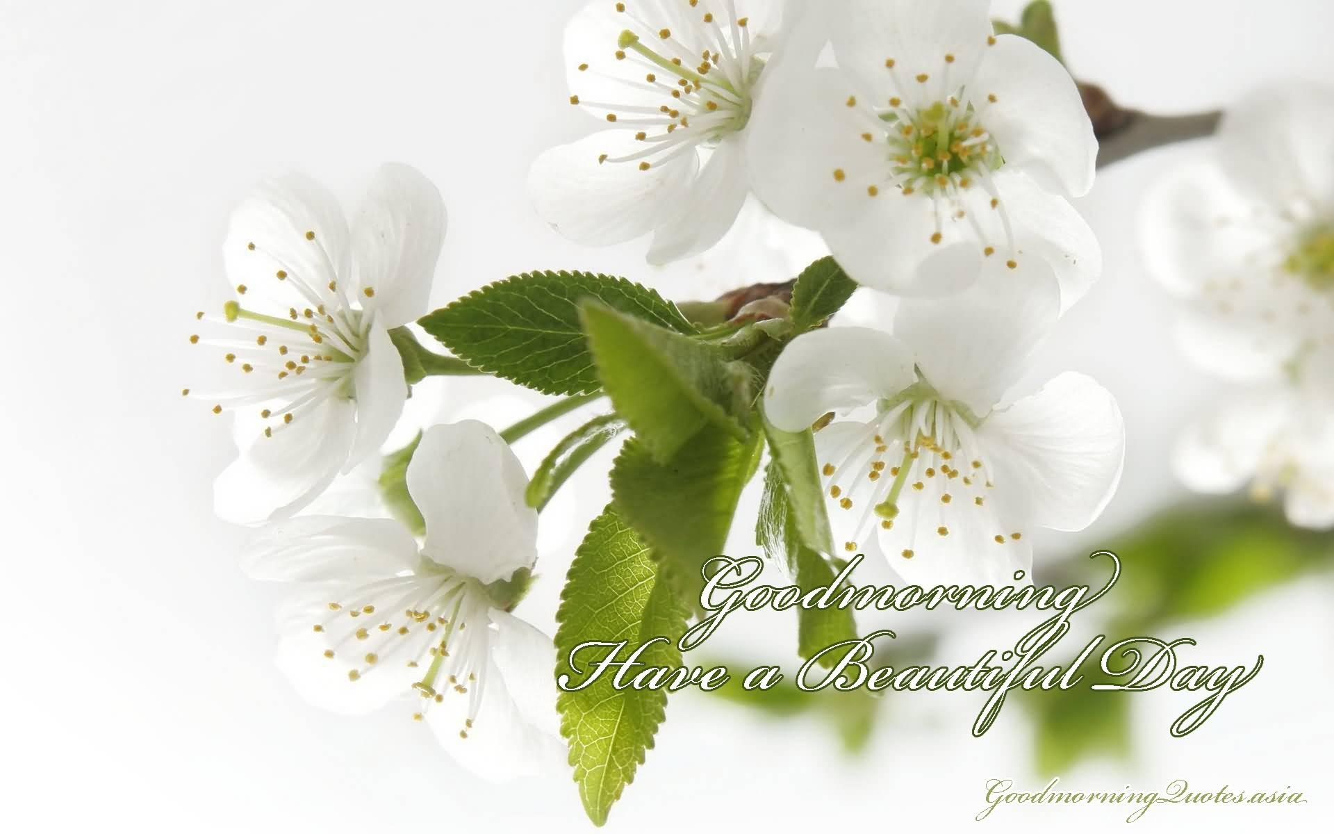 15 Beautiful Good Morning Love Images With Flowers Desktop Background