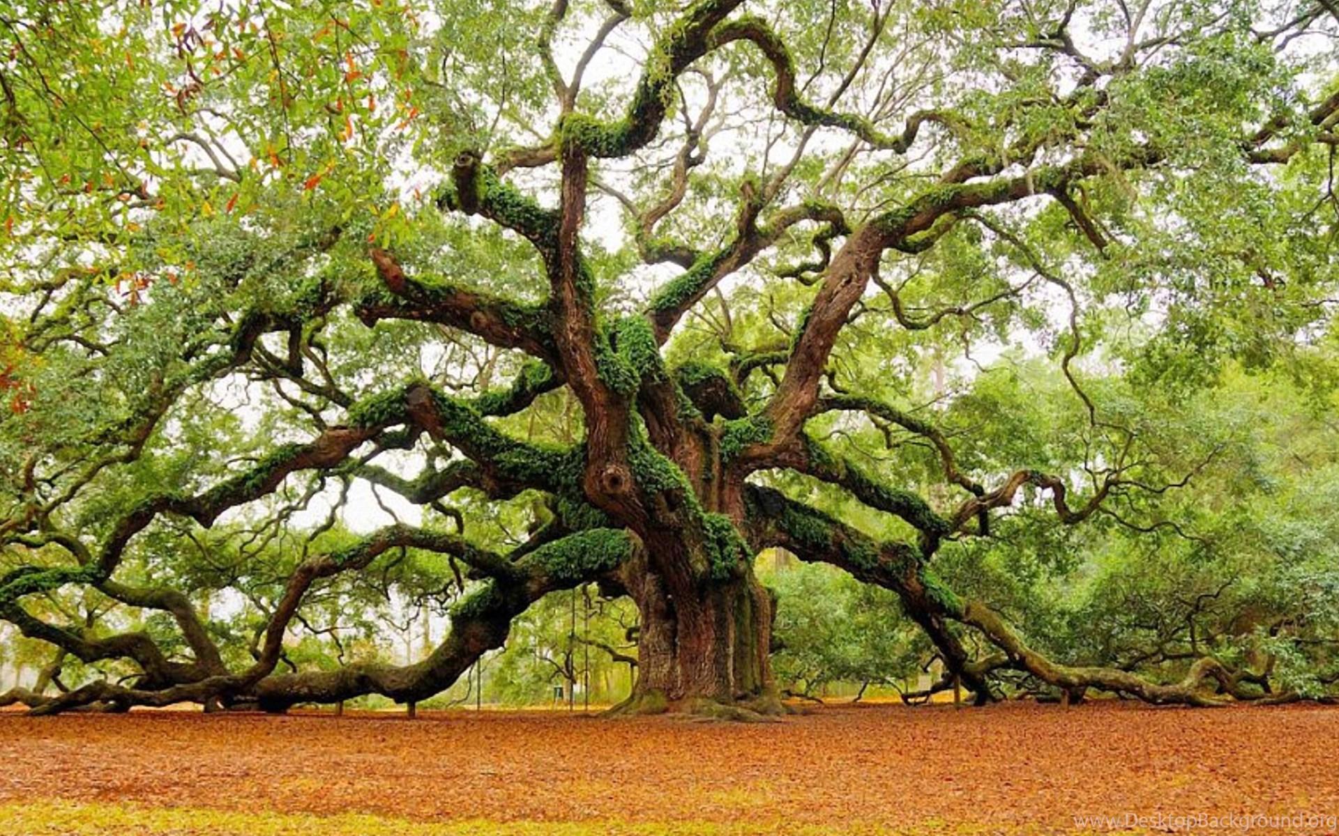essays on trees