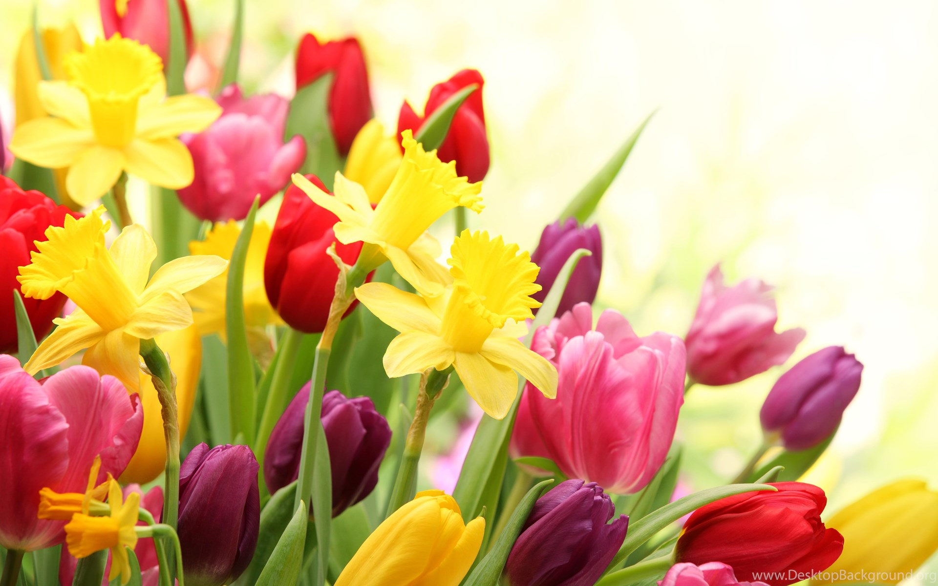 Spring flowers wallpaper desktop background popular mightylinksfo
