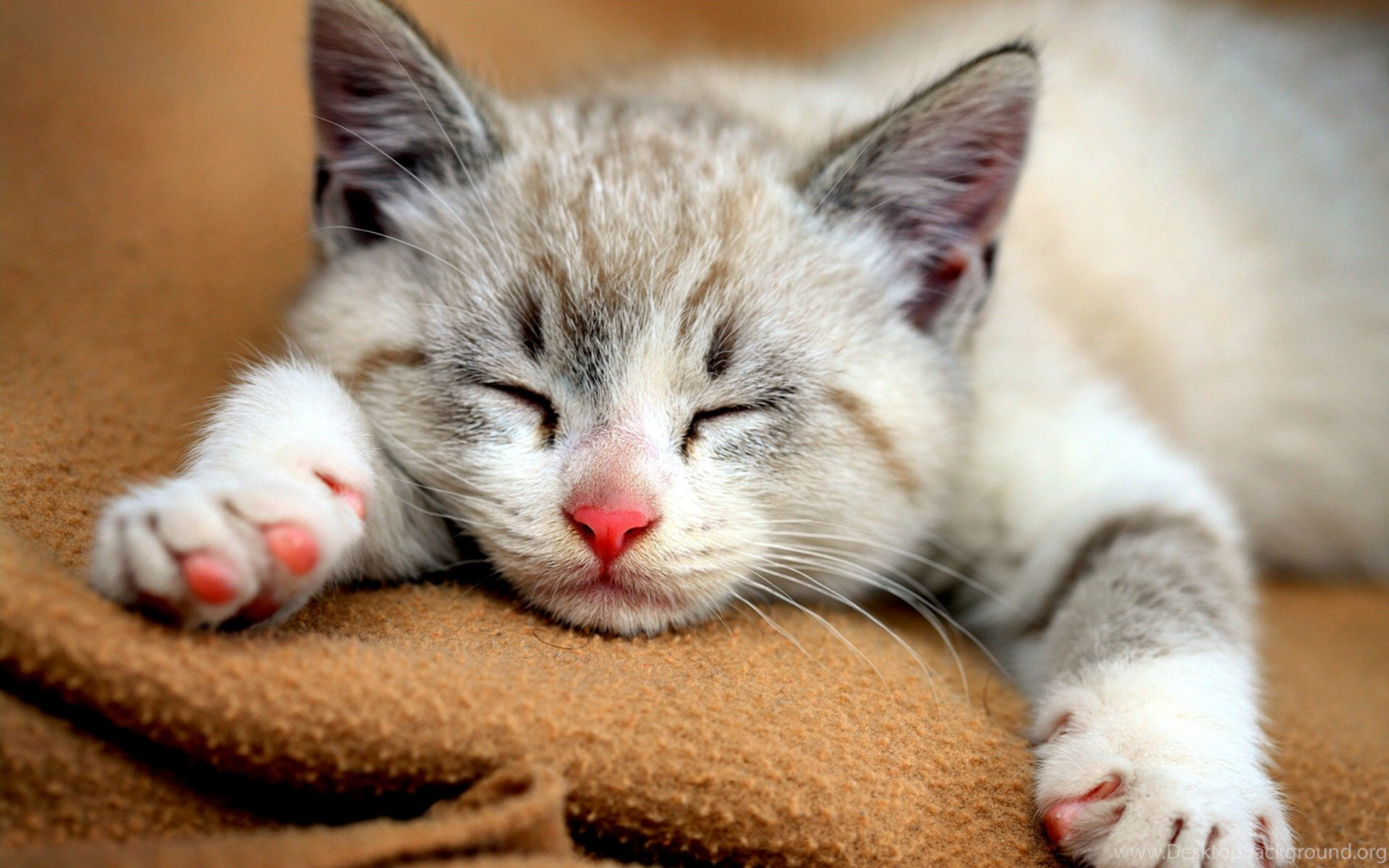 Animal Wallpaper: Cute Baby Cats Wallpapers High Quality ...