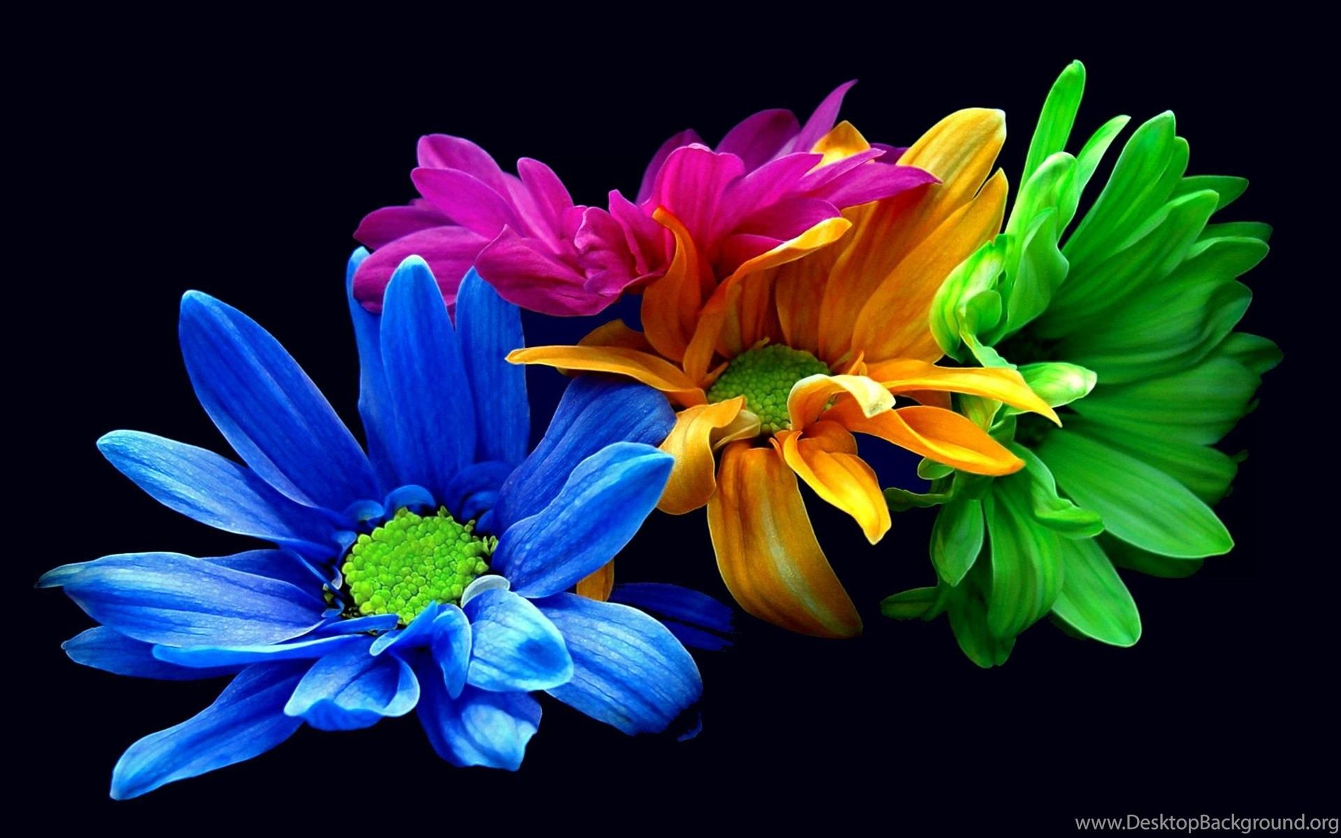 colorful flower iphone wallpapers nature wallpapers