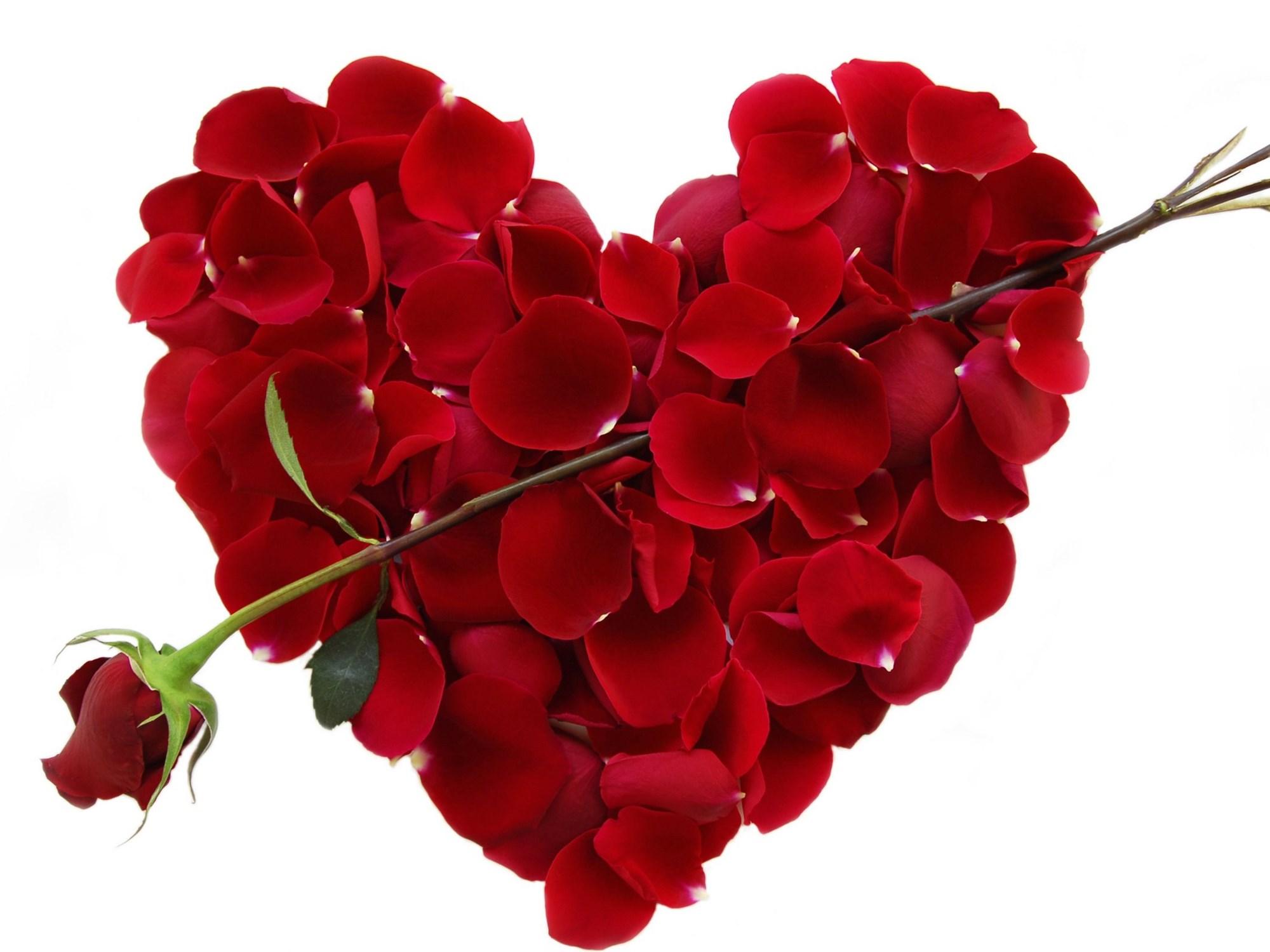 heart wallpapers hd free download hd beautiful desktop wallpapers