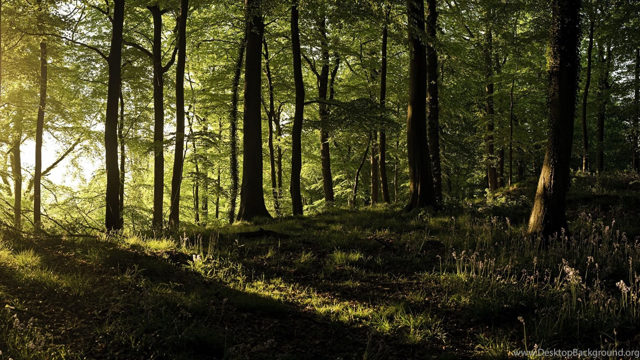 Sunshine In Forest Dual Screen Wallpapers Desktop Background