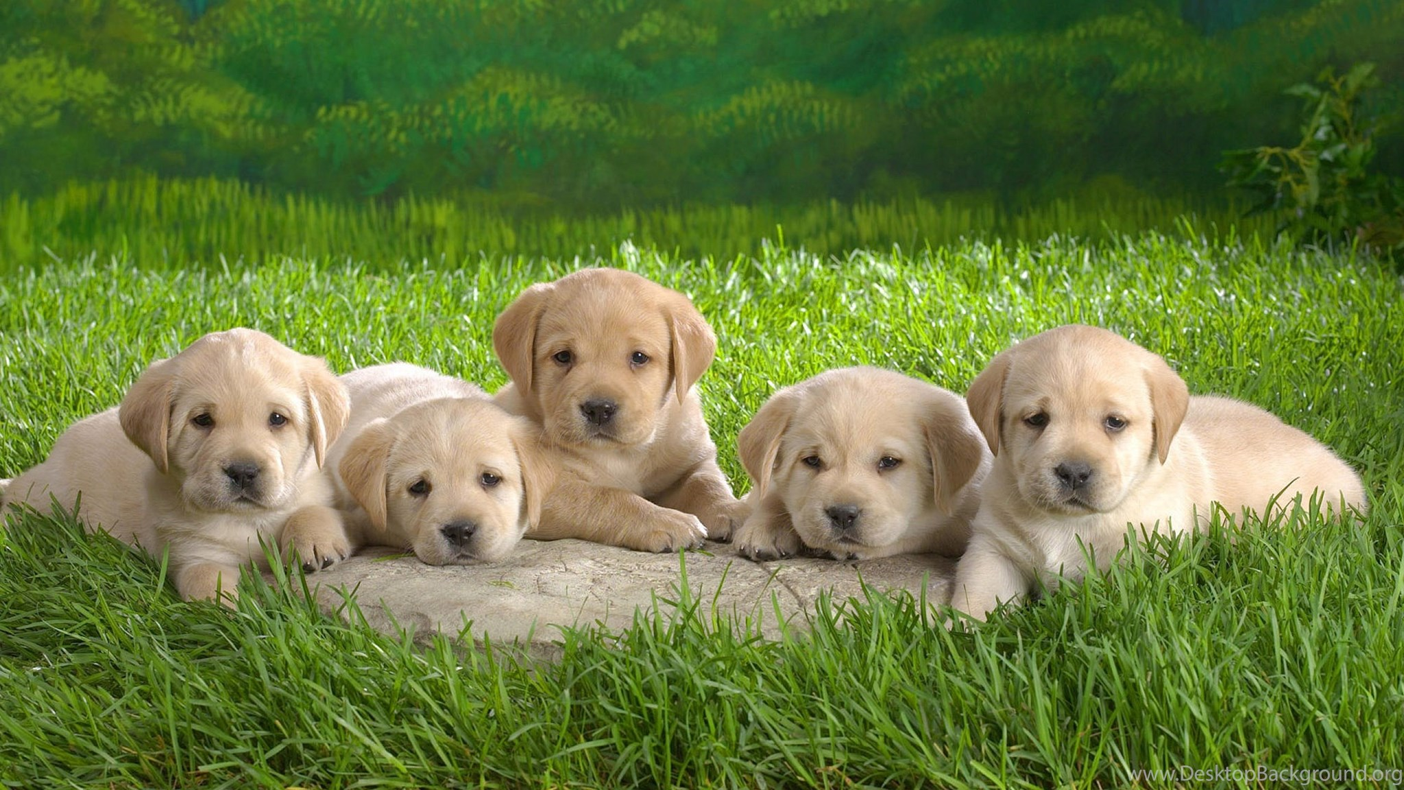 Desktop Hd Cute Puppy Wallpapers Free Download 3d Pictures