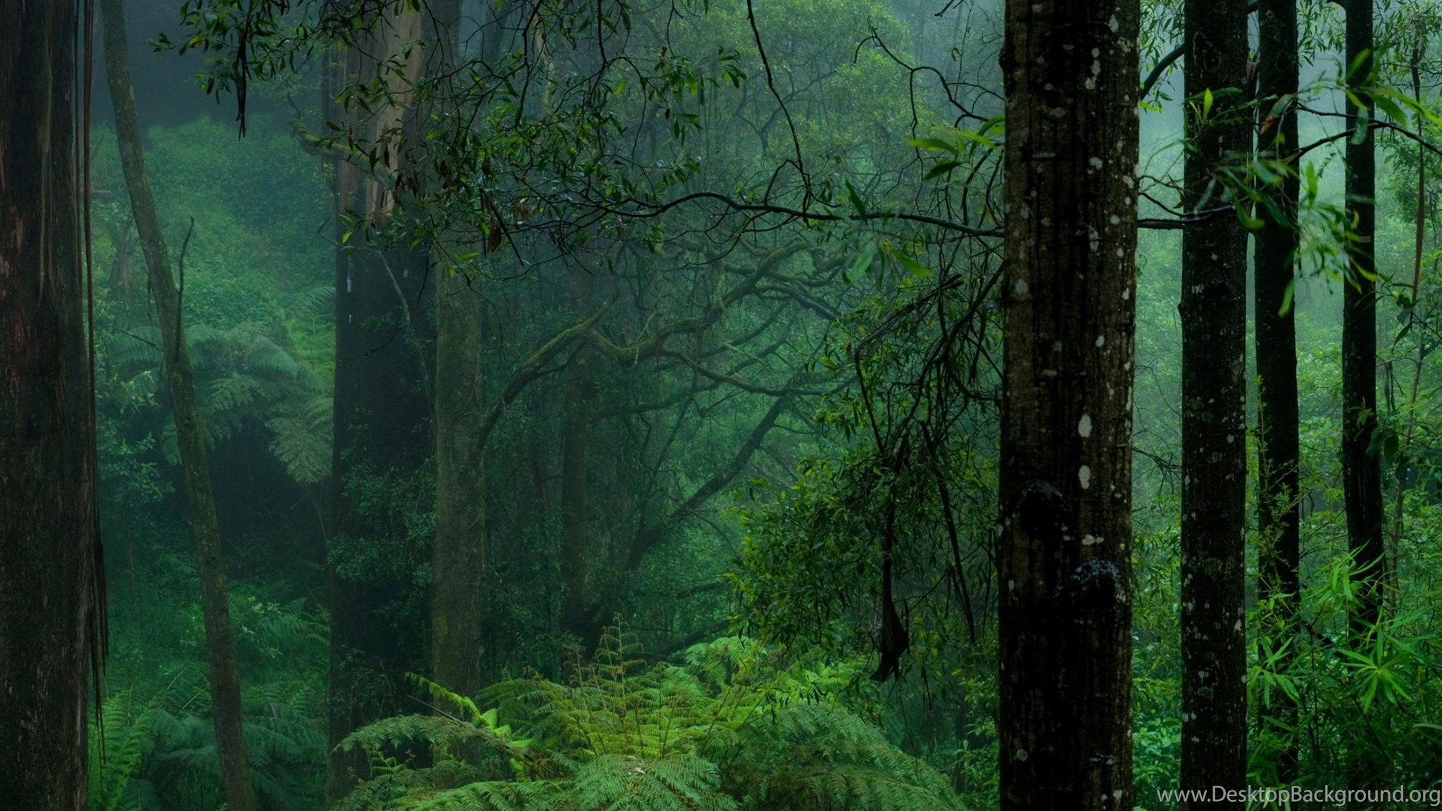 Download Wallpapers Dark Forest 3200 X 1200 Dual Monitor