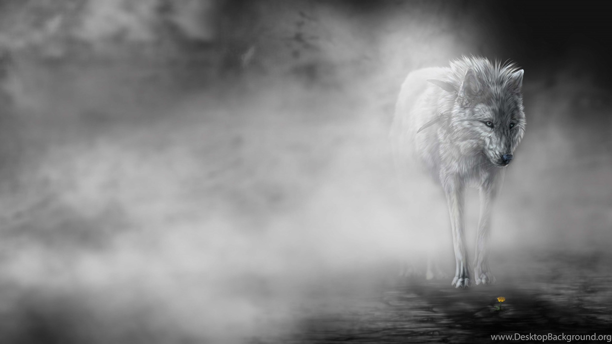 39 File Name Best Wolf Wallpapers HD 1603 Hd