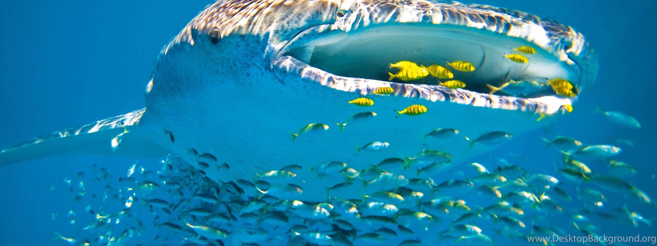 2560x1600 ocean sharks - photo #25