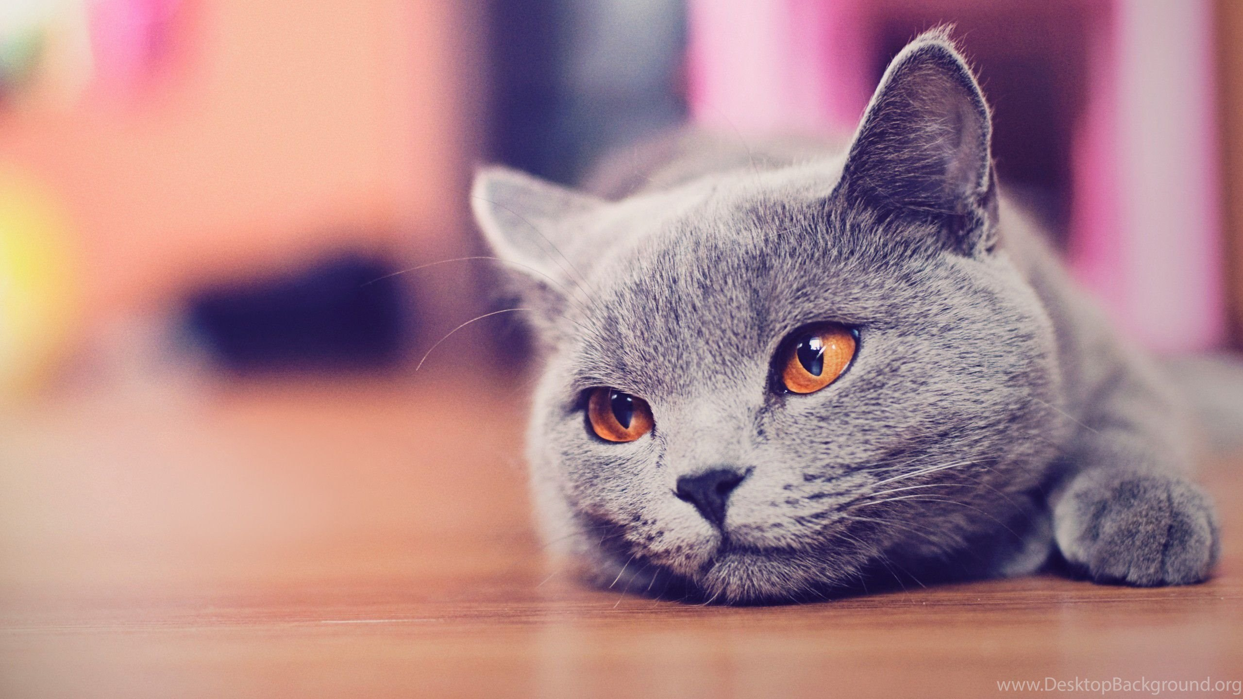 Download Cute Small Cat Wallpapers Full Hd Wallpapers 1600x1200px
