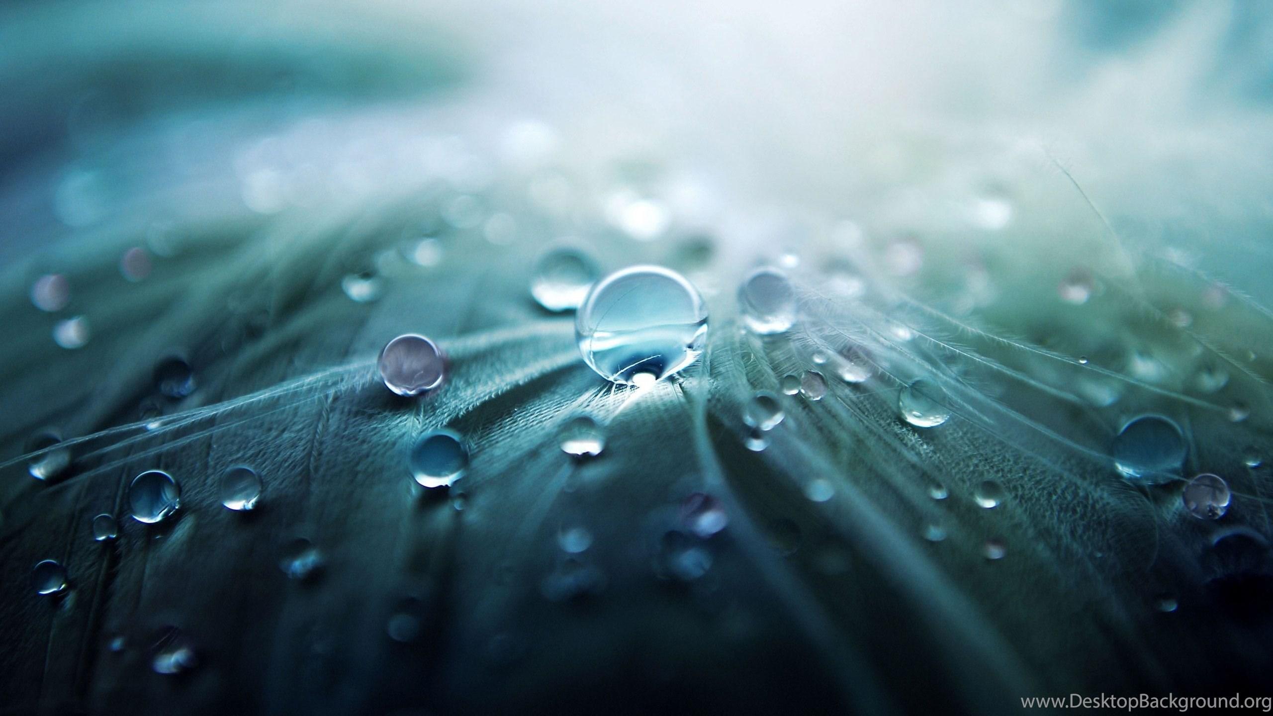 Water Drop Hd Wallpapers Desktop Background