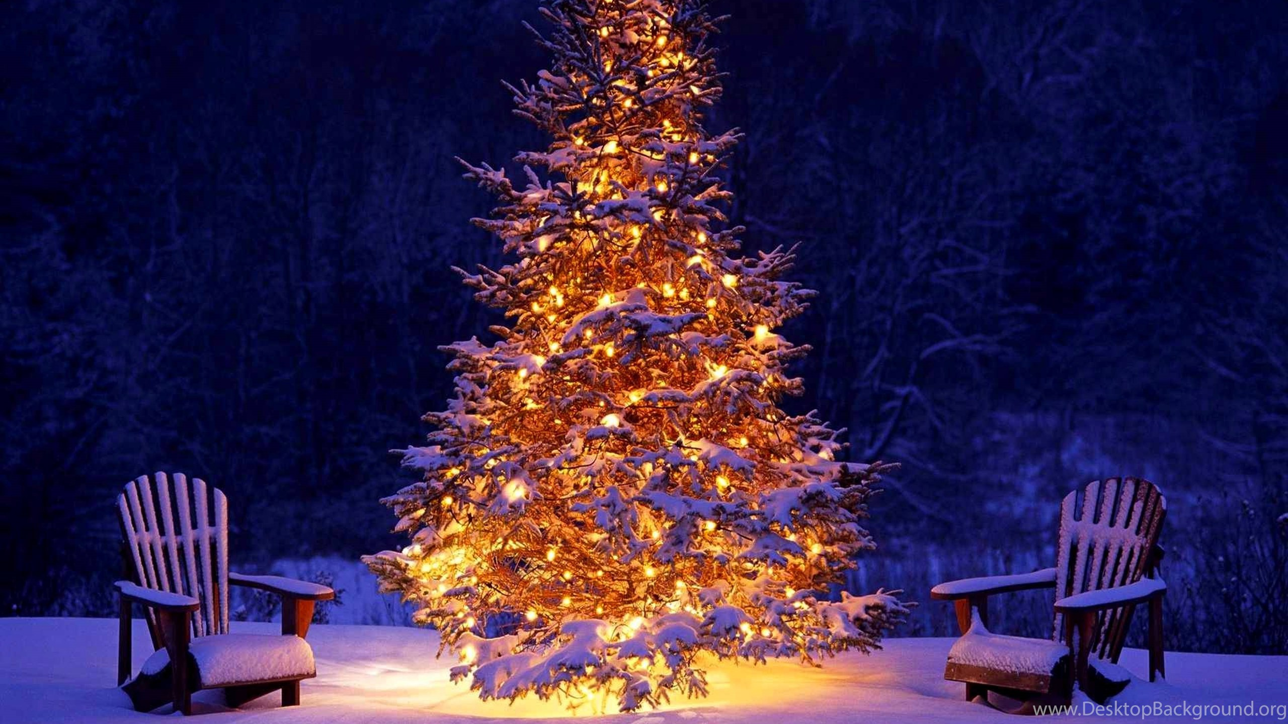 winter holiday now forest christmas, holidays wallpapers desktop