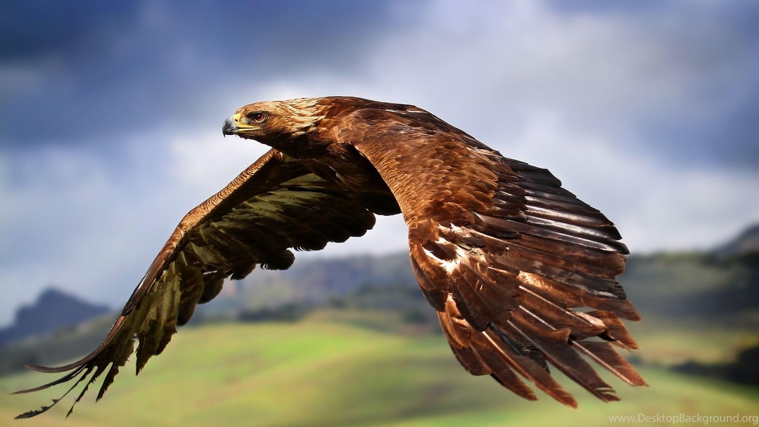Download Eagle Wallpapers For Iphone Desktop Background