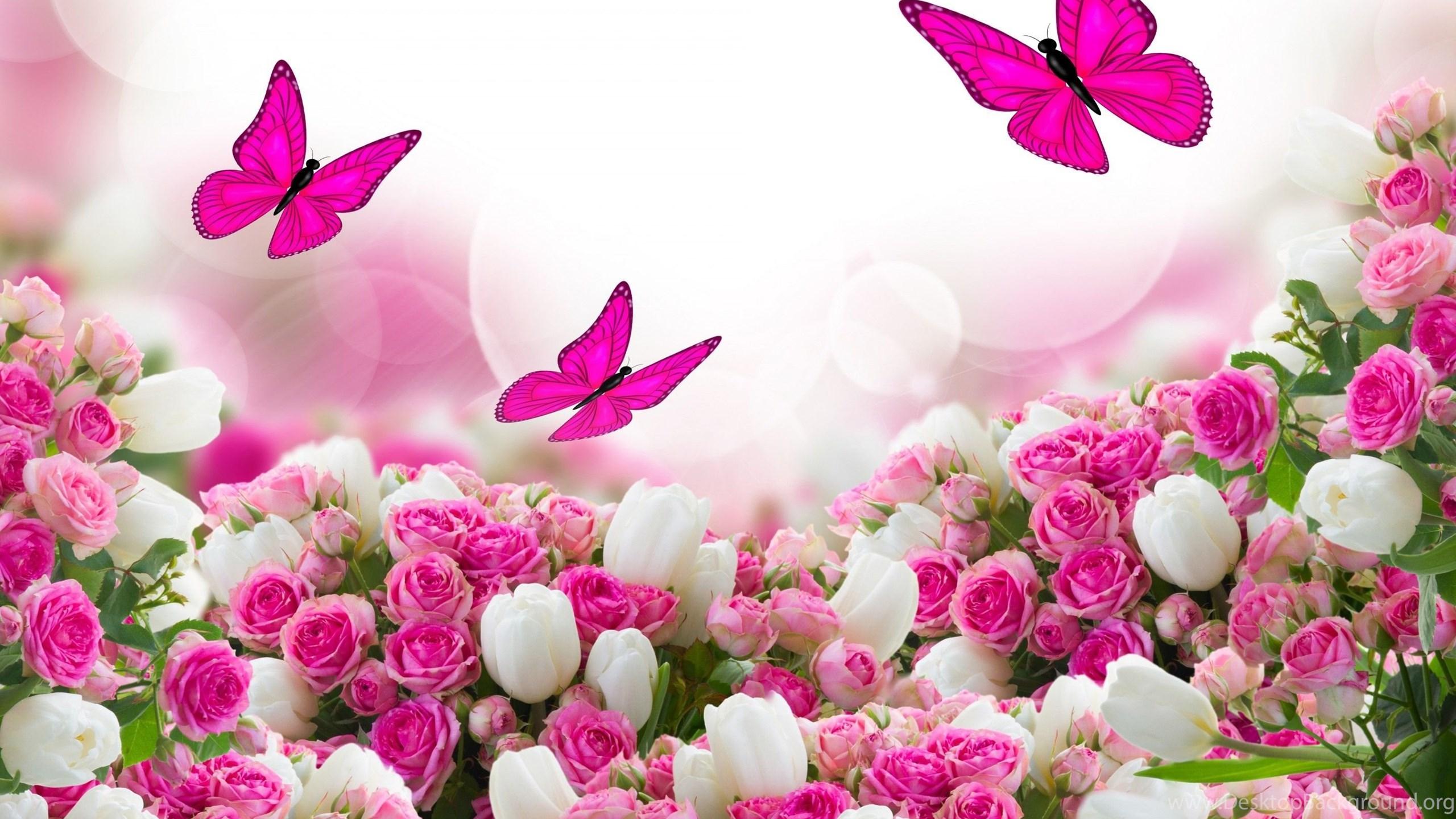 White rose flower garden wallpapers desktop background netbook mightylinksfo