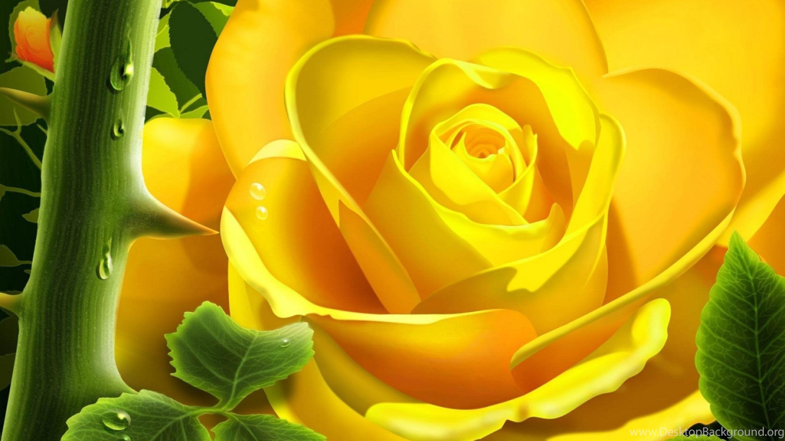 Full Hd Rose Flower Wallpapers Wallpapers Hd Wide Desktop Background