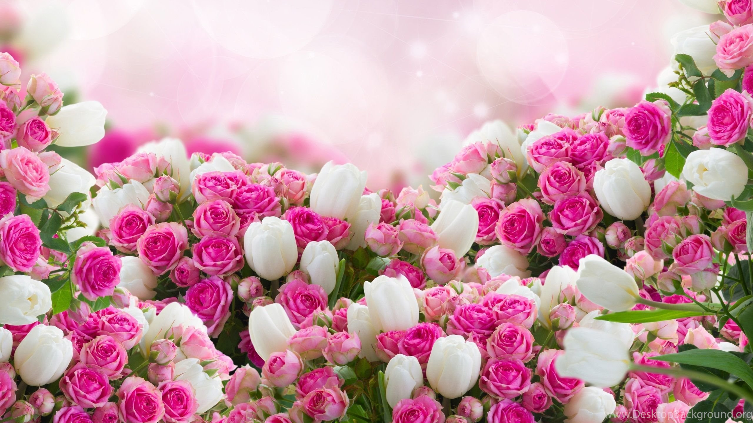 Red and white flowers wallpapers download high resoltuion desktop netbook mightylinksfo