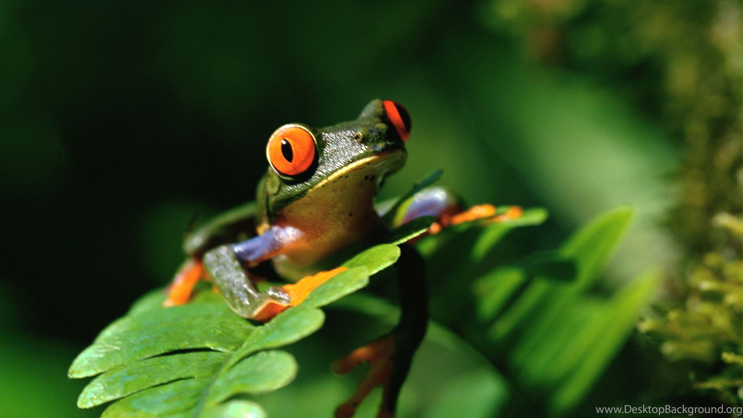 Frog Desktop Wallpaper Frog Photos New Wallpapers Desktop Background