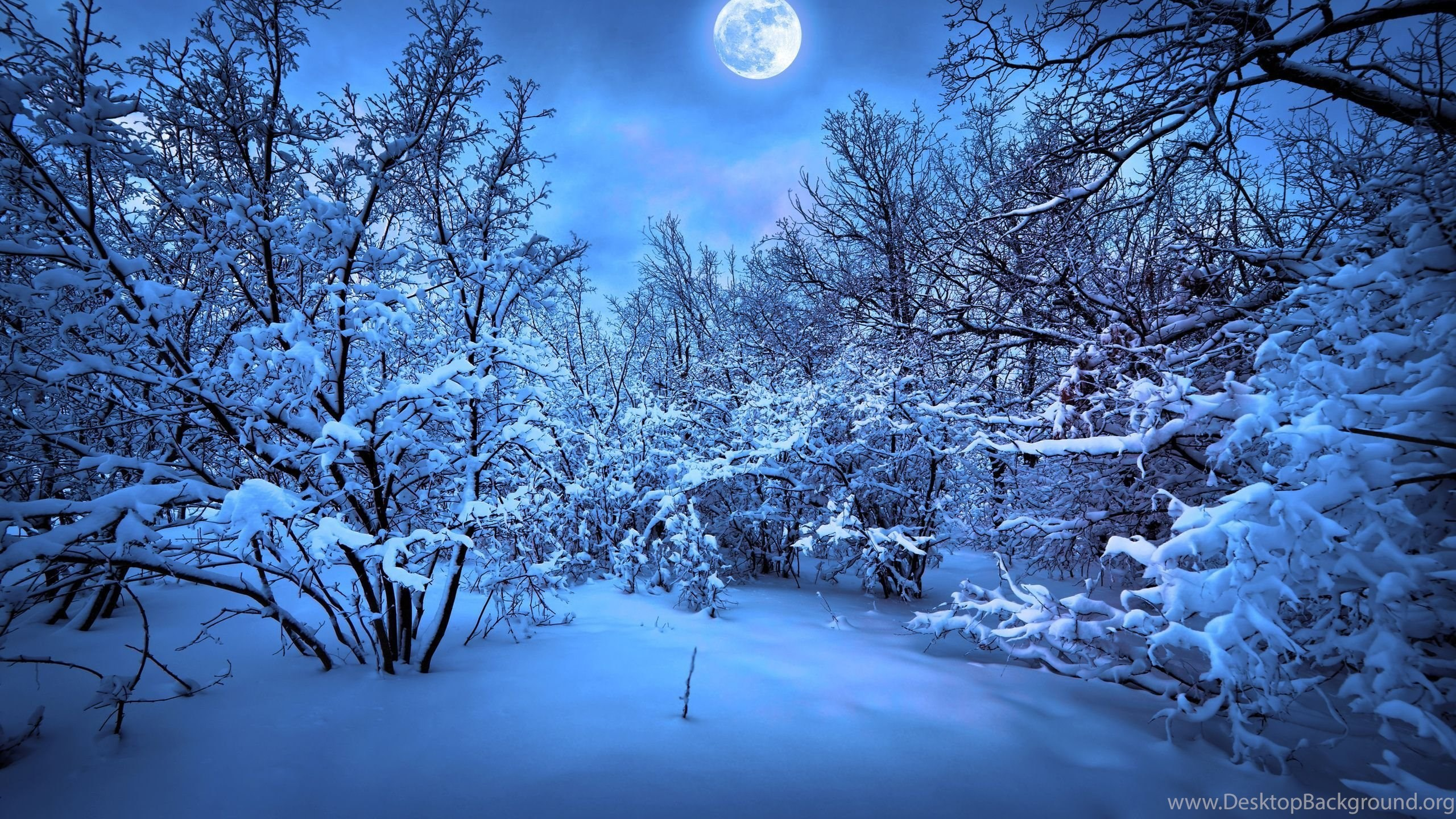 3565 christmas snow widescreen backgrounds wallpapers attachment