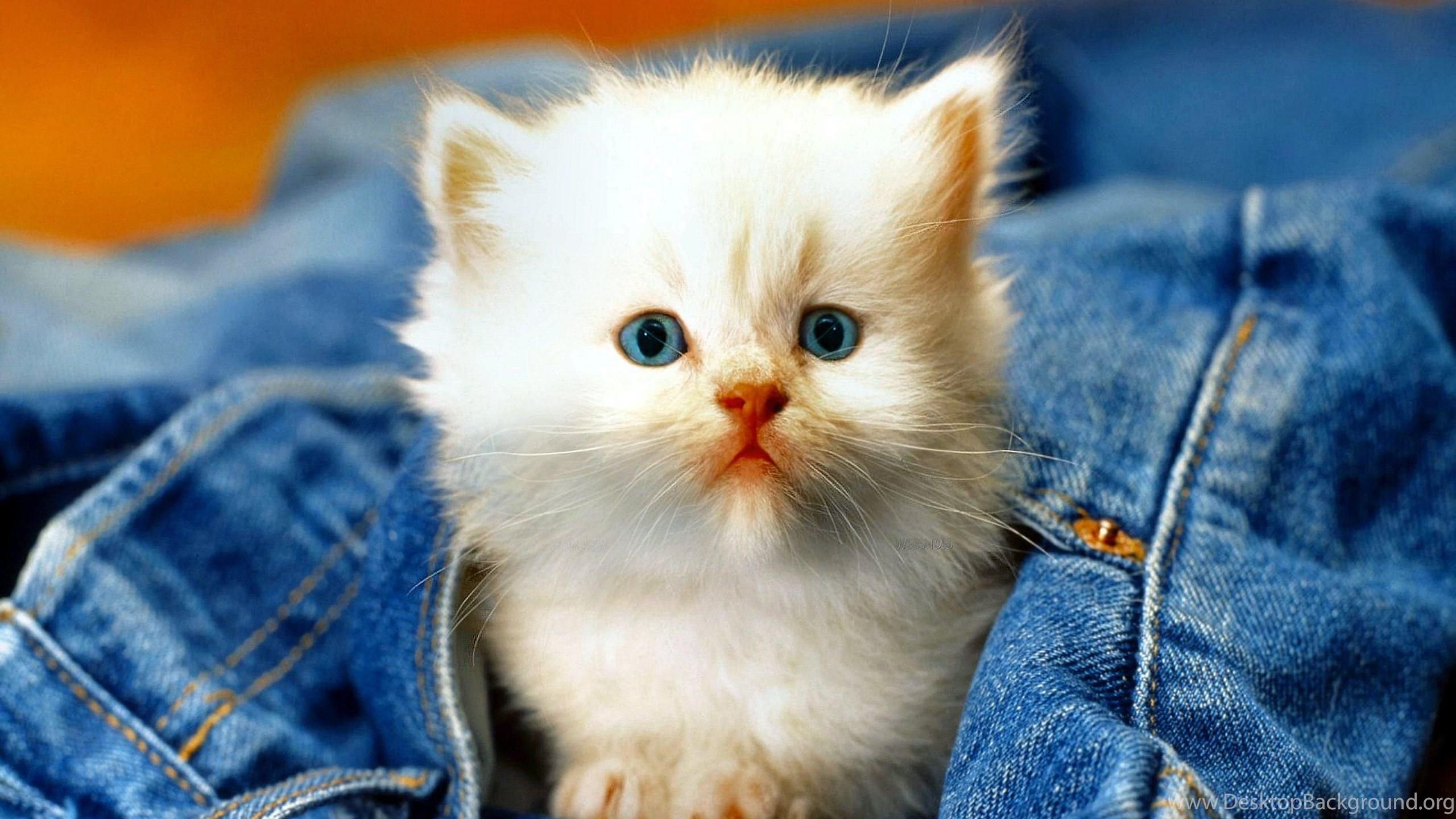 Must see Wallpaper Mobile Kitten - 182227_kittens-kitten-cat-cats-baby-cute-s-wallpapers_2960x1850_h  Photograph_231071.jpg