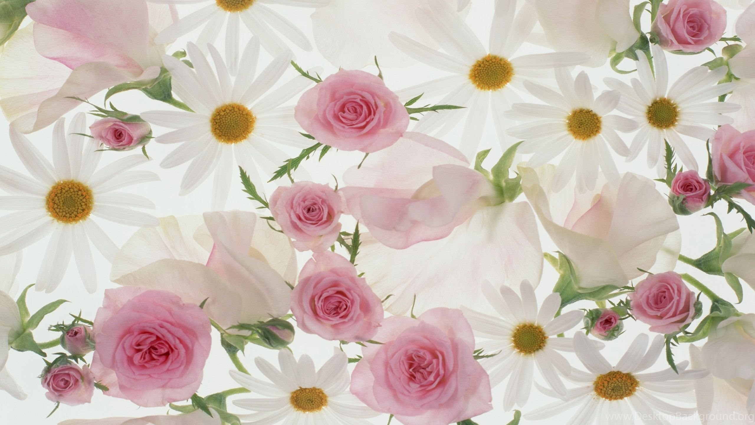 Flowers On Pinterest Desktop Background
