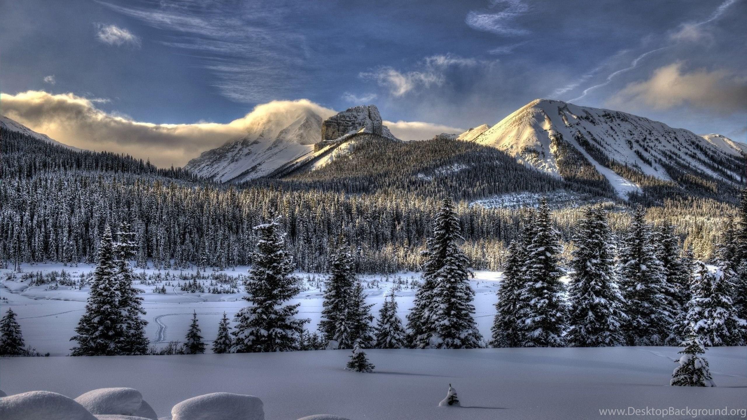 Download Wallpapers 2560x1440 Snow Winter Trees Mac Imac 27 Hd Desktop Background
