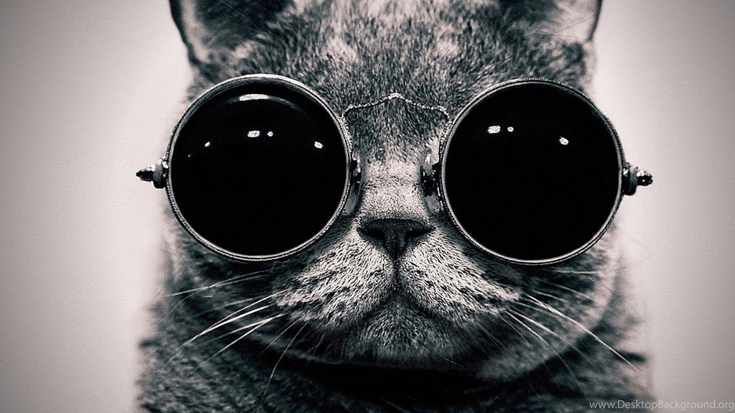 Funny Black Cat Uhd Wallpapers Ultra High Definition Wallpapers Desktop Background