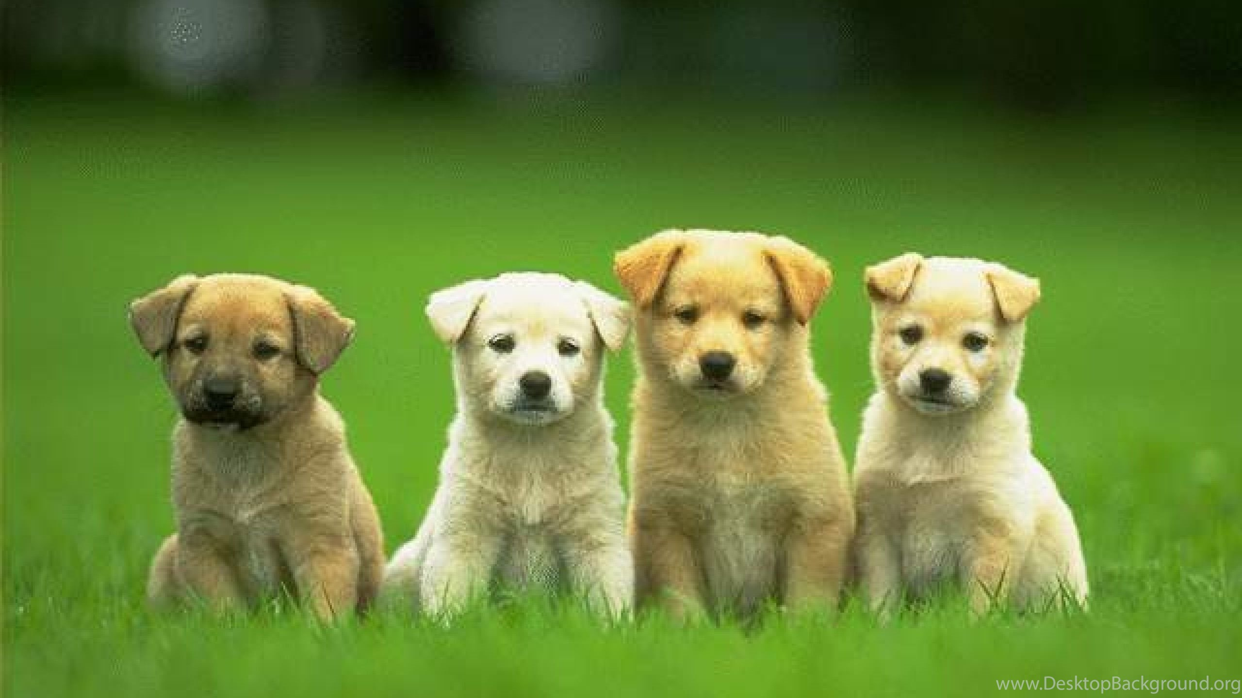 Download Free Cute Dog Hd Wallpapers The Quotes Land Desktop Background
