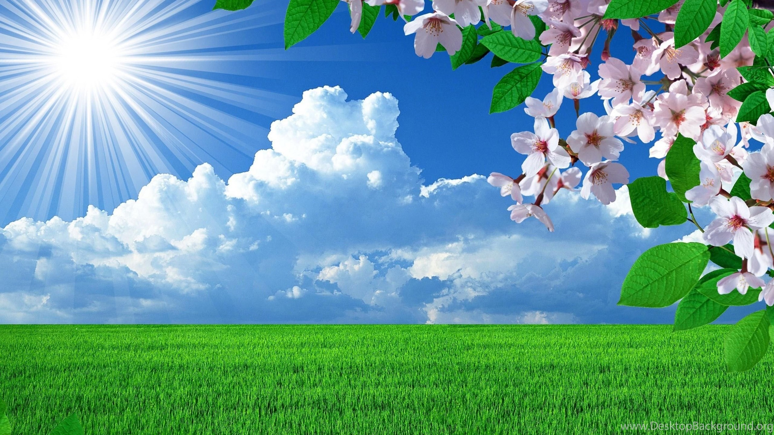 Spring Nature Flowers Landscapes Hq Wallpapers New Hd Wallpapers