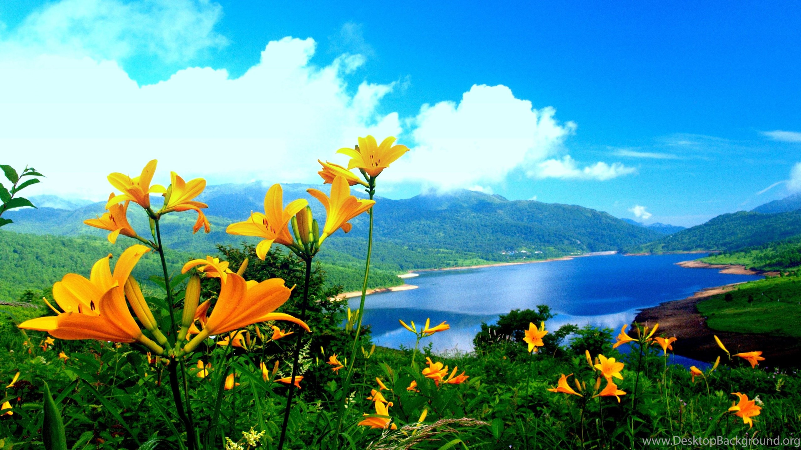 Spring Flower Mountain Nature Wallpapers New HD Wallpapers ...