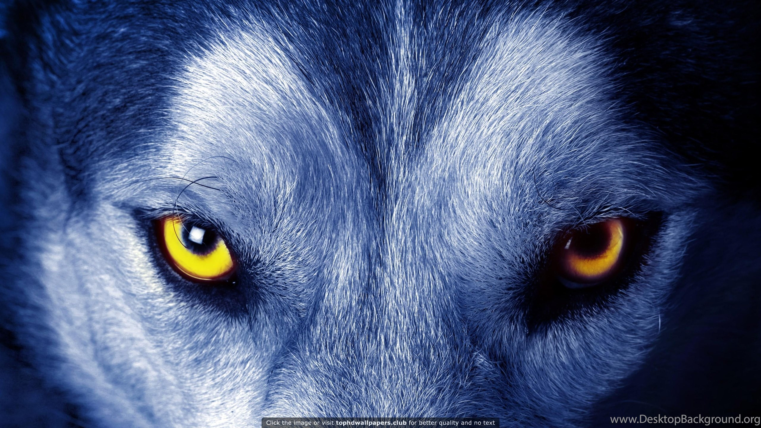 Download Wallpaper Mac Wolf - 391793_best-wolf-4k-or-hd-wallpapers-for-your-pc-mac-or-mobile-device_3840x2160_h  Best Photo Reference_146019.jpg