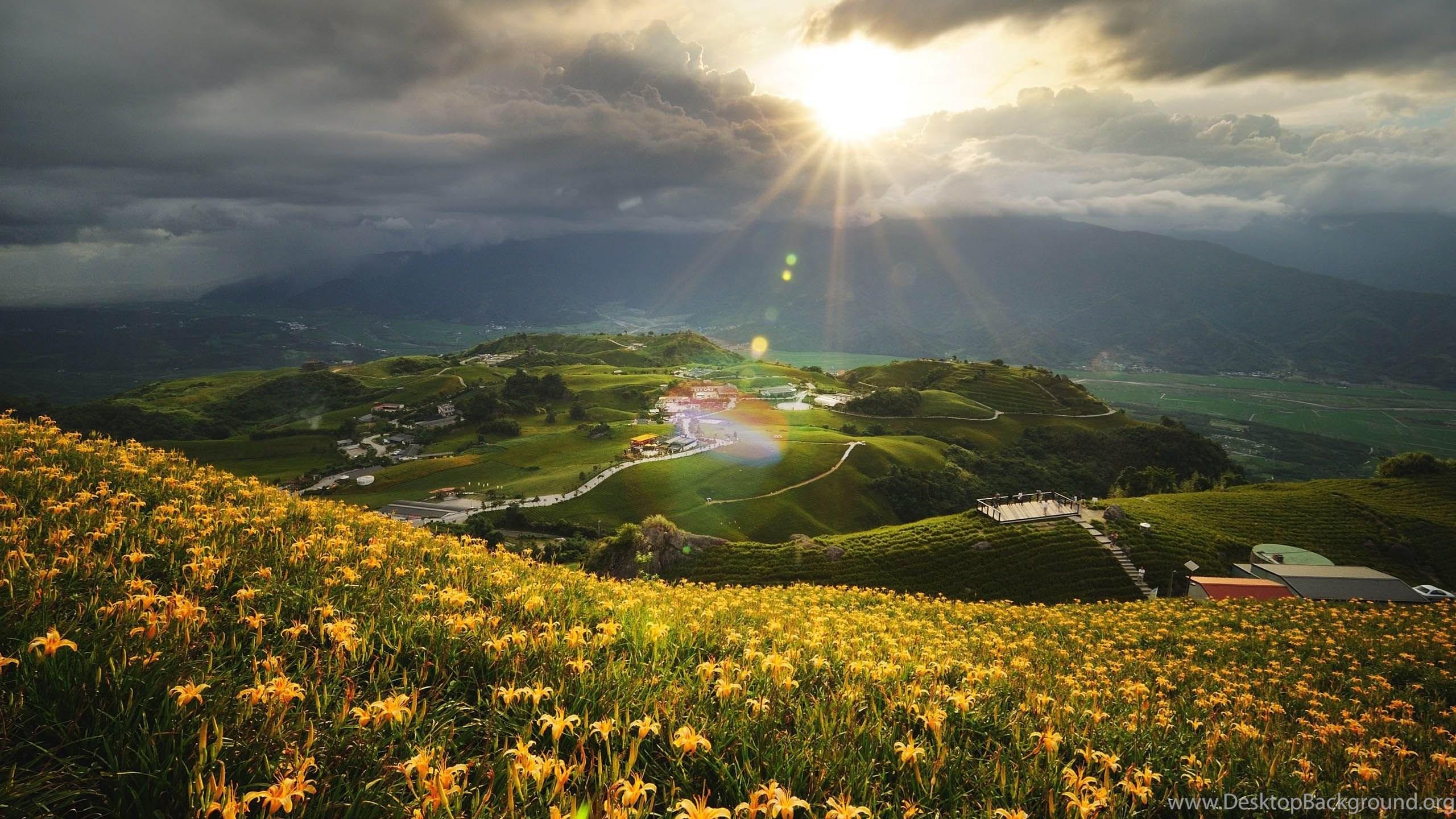 Flowers with beautiful scenery hd desktop wallpapers desktop background netbook izmirmasajfo