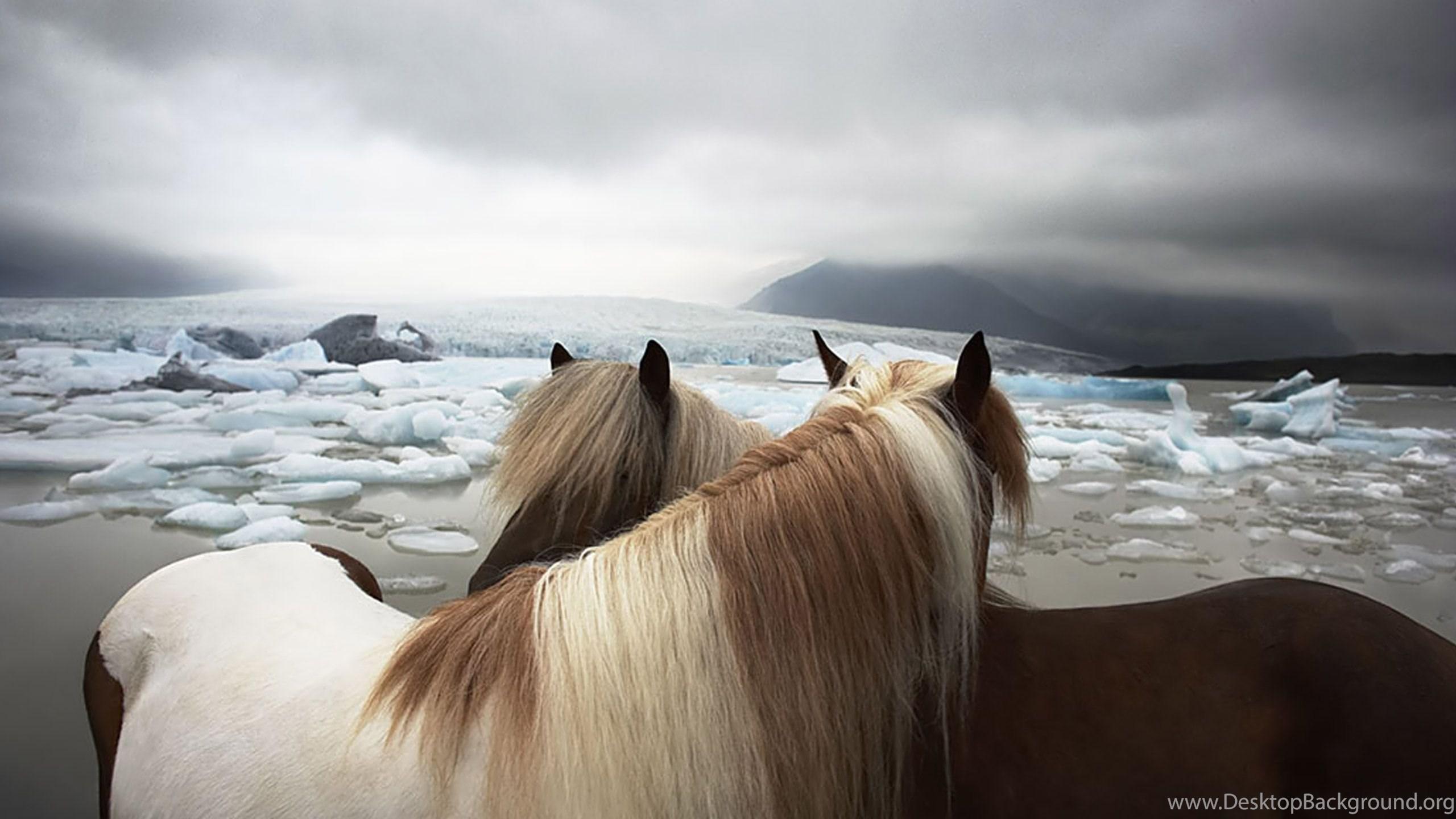 Desktop Wallpapers Gallery Windows 7 Horses Romantic Theme