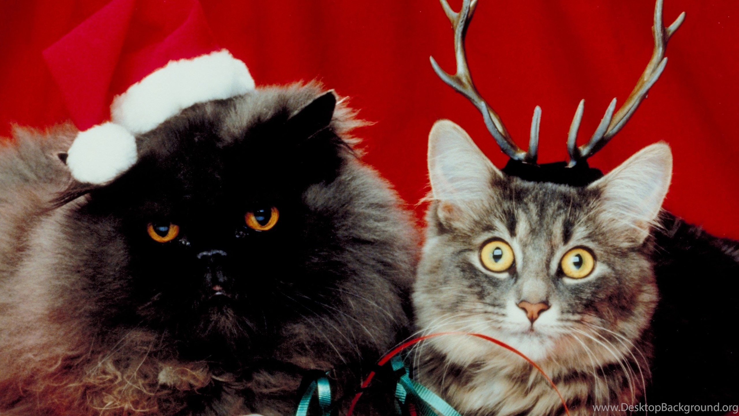 Funny Christmas Cat 1920x1080px Desktop Background