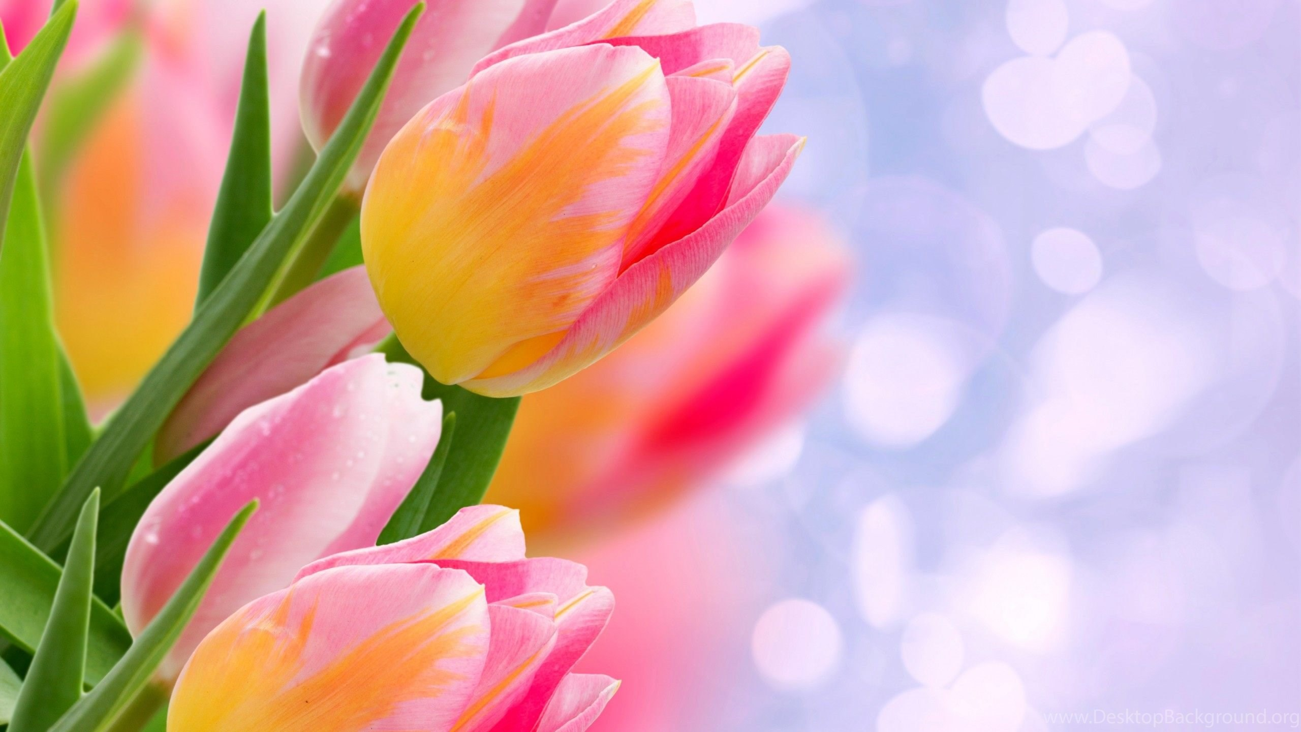 flower wallpapers new and best collection free download in hd