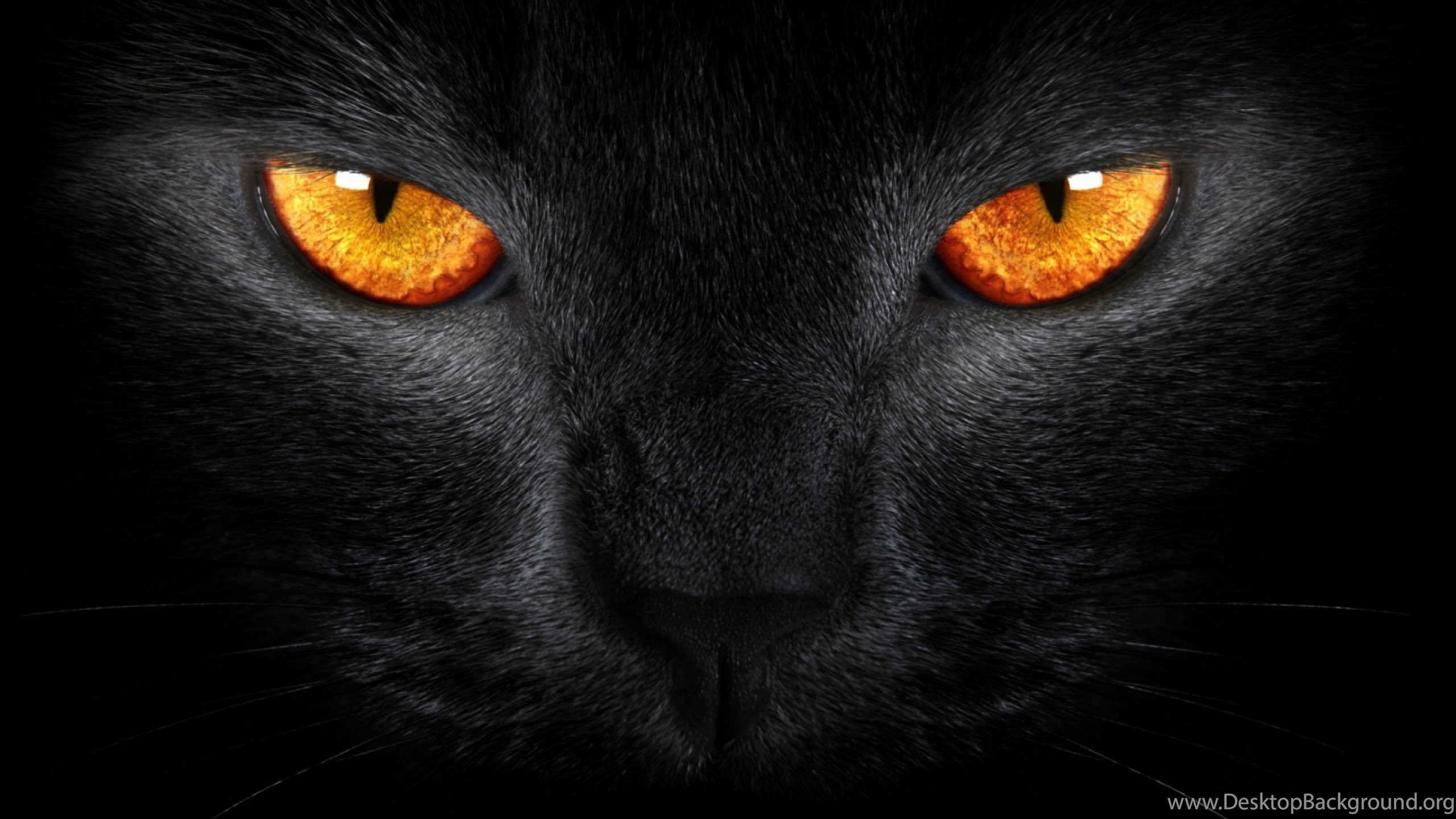 Wallpapers Tiger Eye Homepage Cat Black Orange Eyes 2560x1440