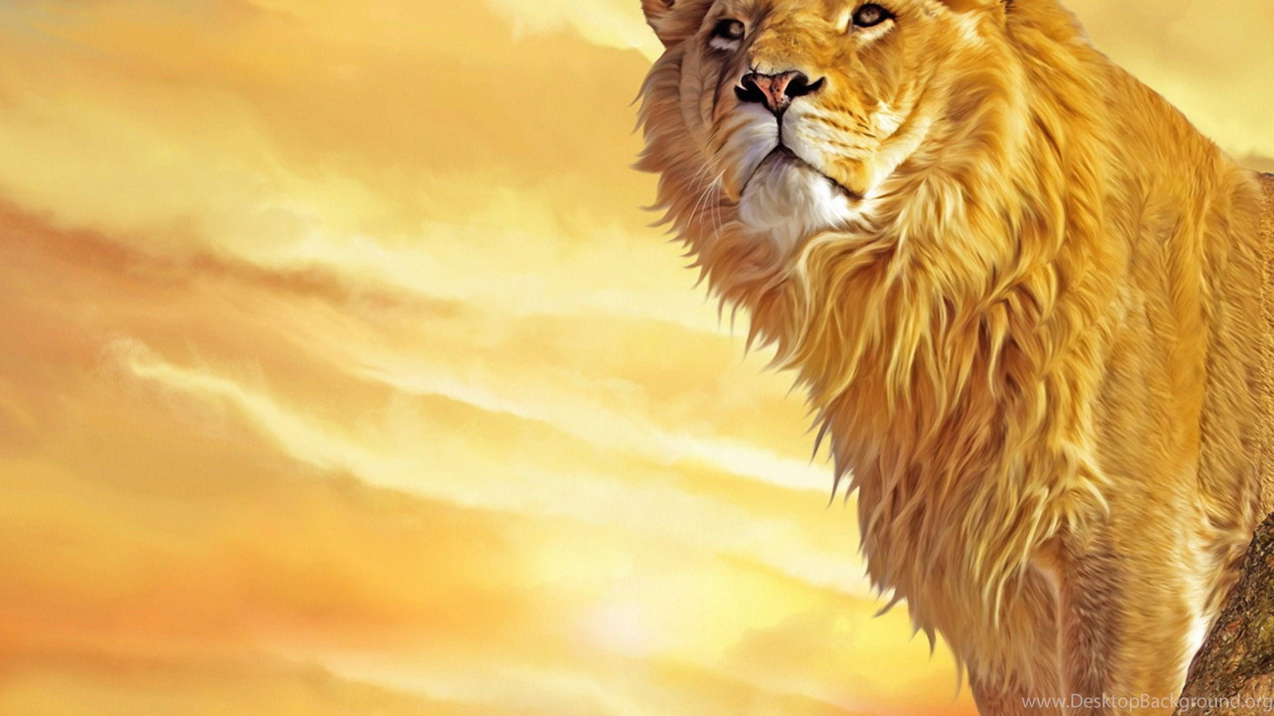 Hd Lion Wallpapers Desktop Background