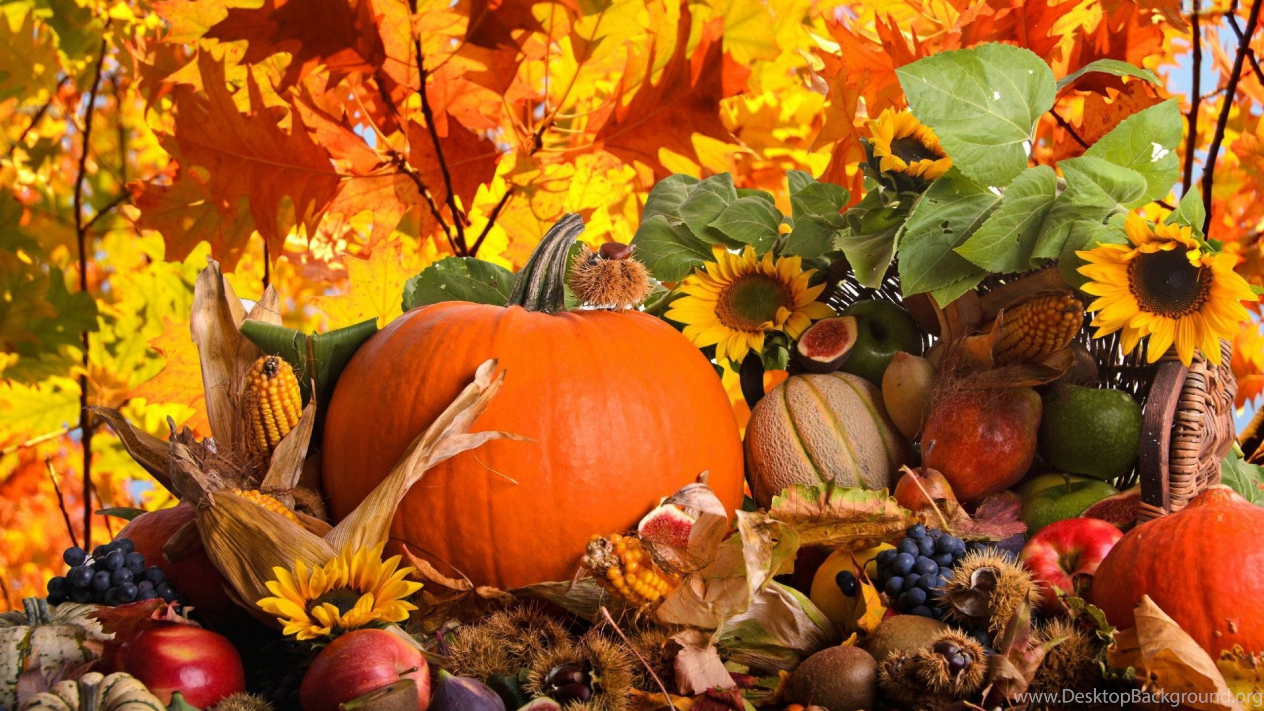 647907 thanksgiving wallpapers 1177 hd