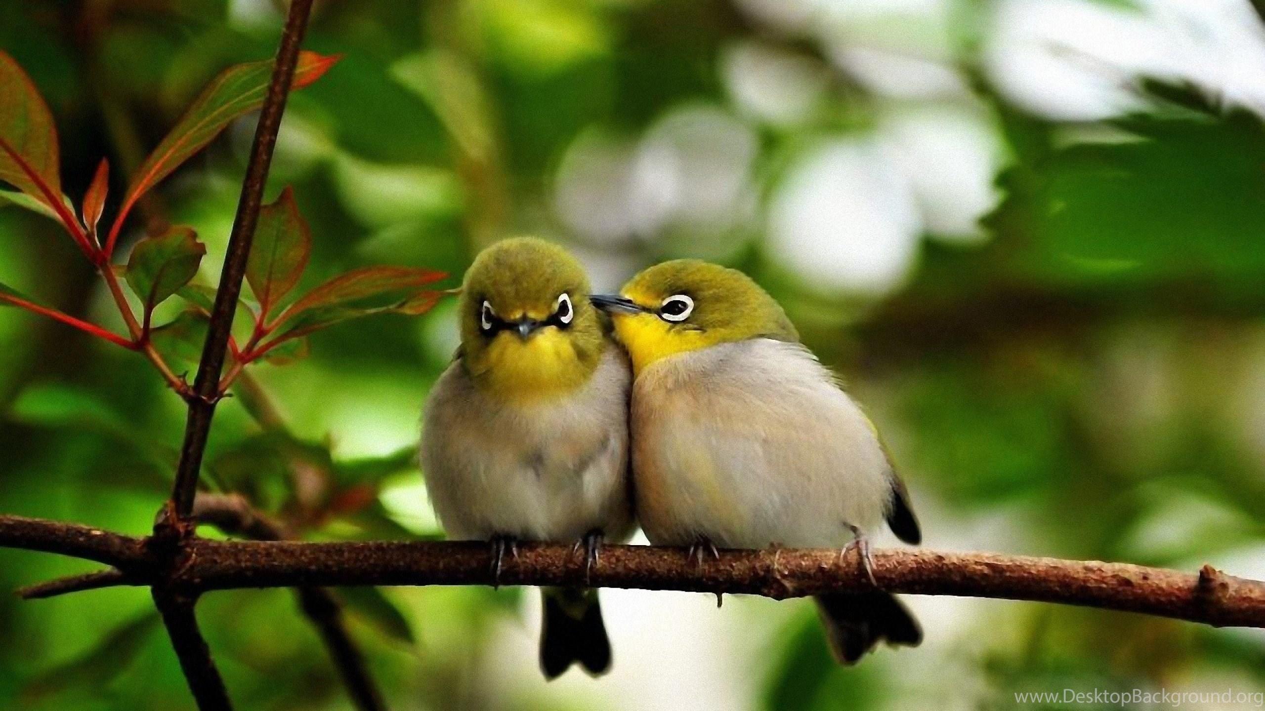 Love Birds Wallpapers Hd For Desktop Download Of Cute Birds Desktop Background