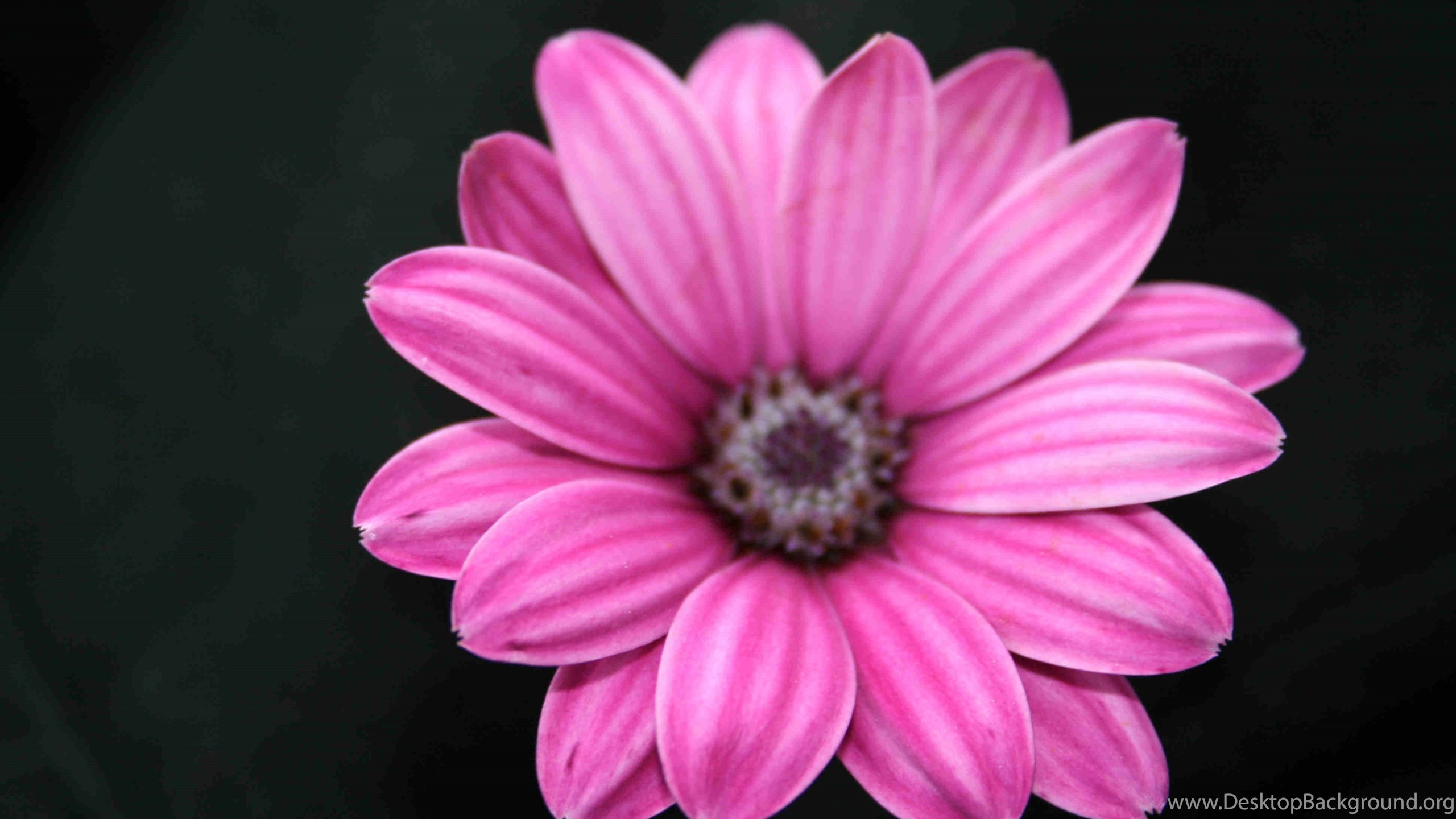 Black with pink flowers wallpapers danasrhpp desktop background netbook mightylinksfo