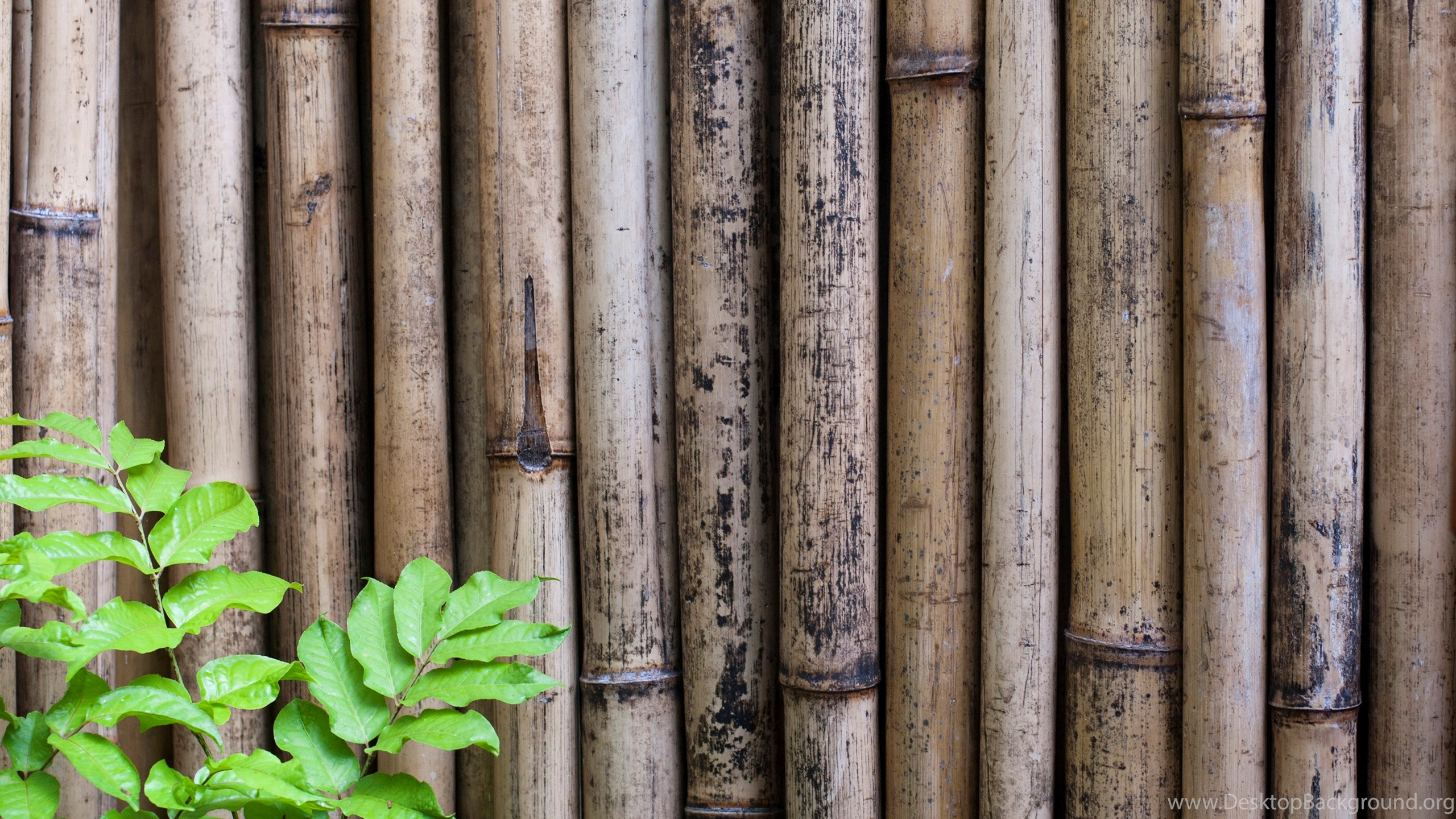 Free stock photo 6306 dried bamboo backgrounds desktop backg.
