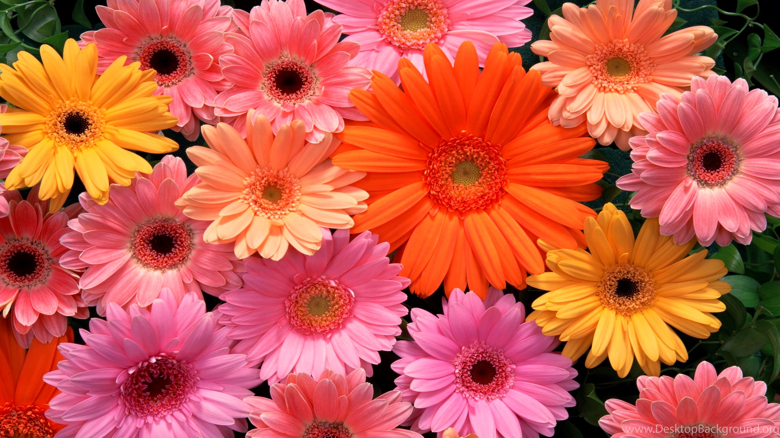 Download Beautiful Flowers Wallpapers Hd Wallpapers Desktop