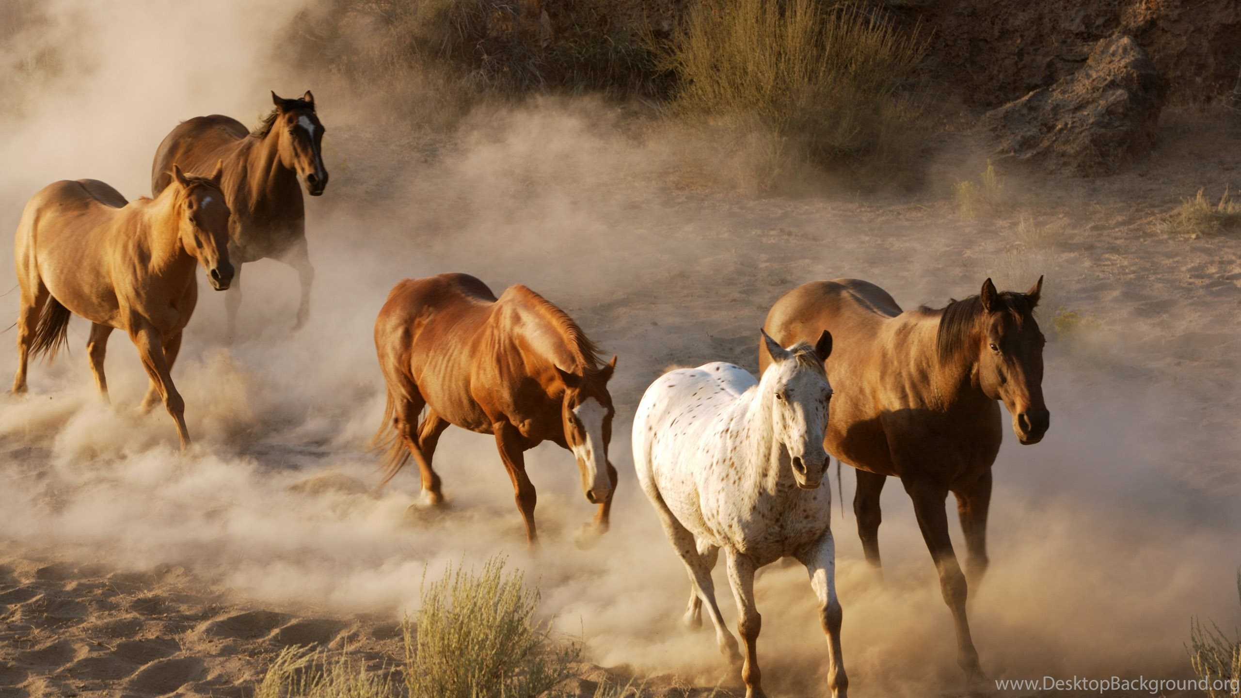 Horses wallpapers 2 desktop background netbook voltagebd Image collections