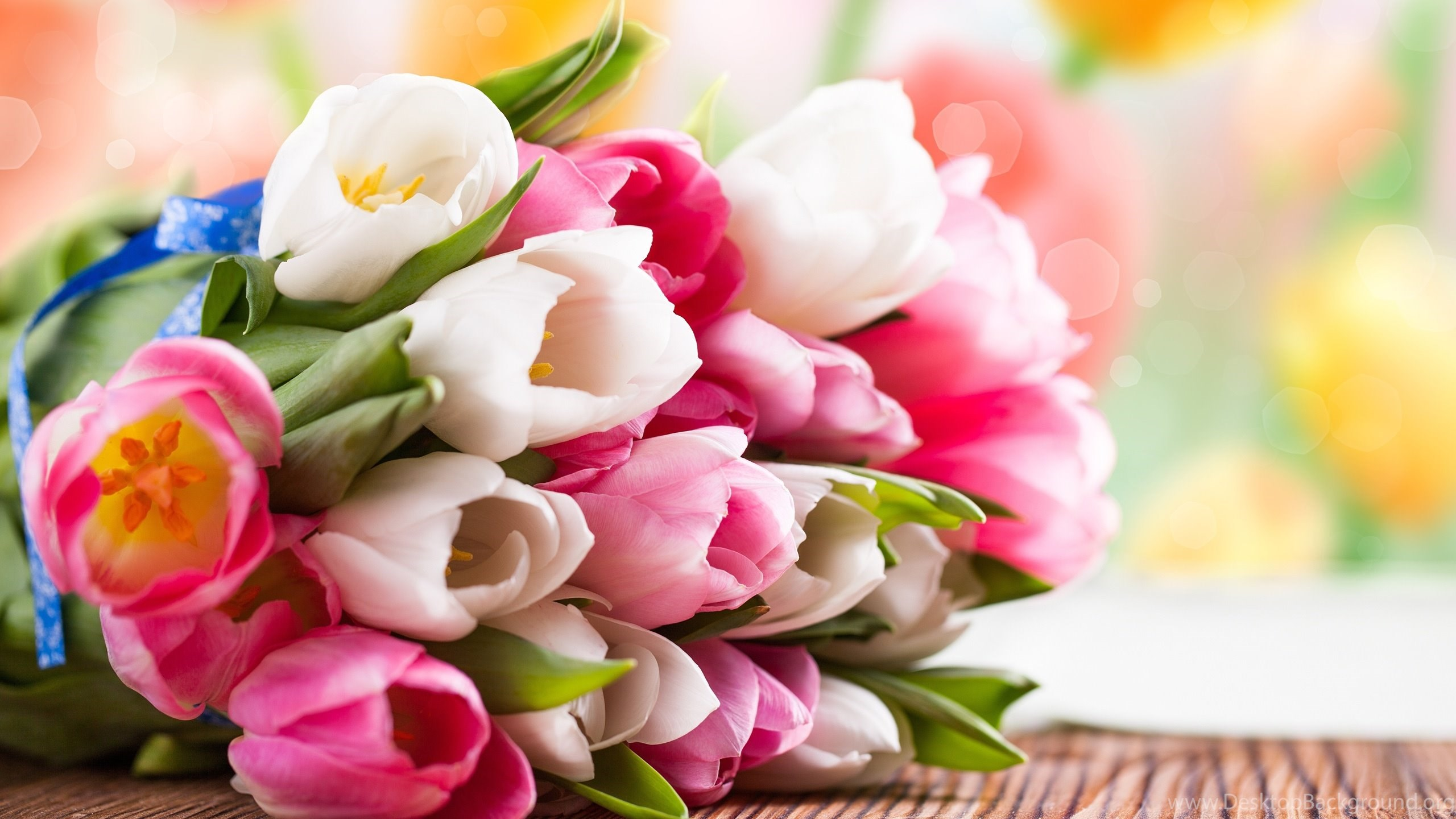 Pink and white tulip flower bouquet wallpaperpink hd wallpapers netbook izmirmasajfo