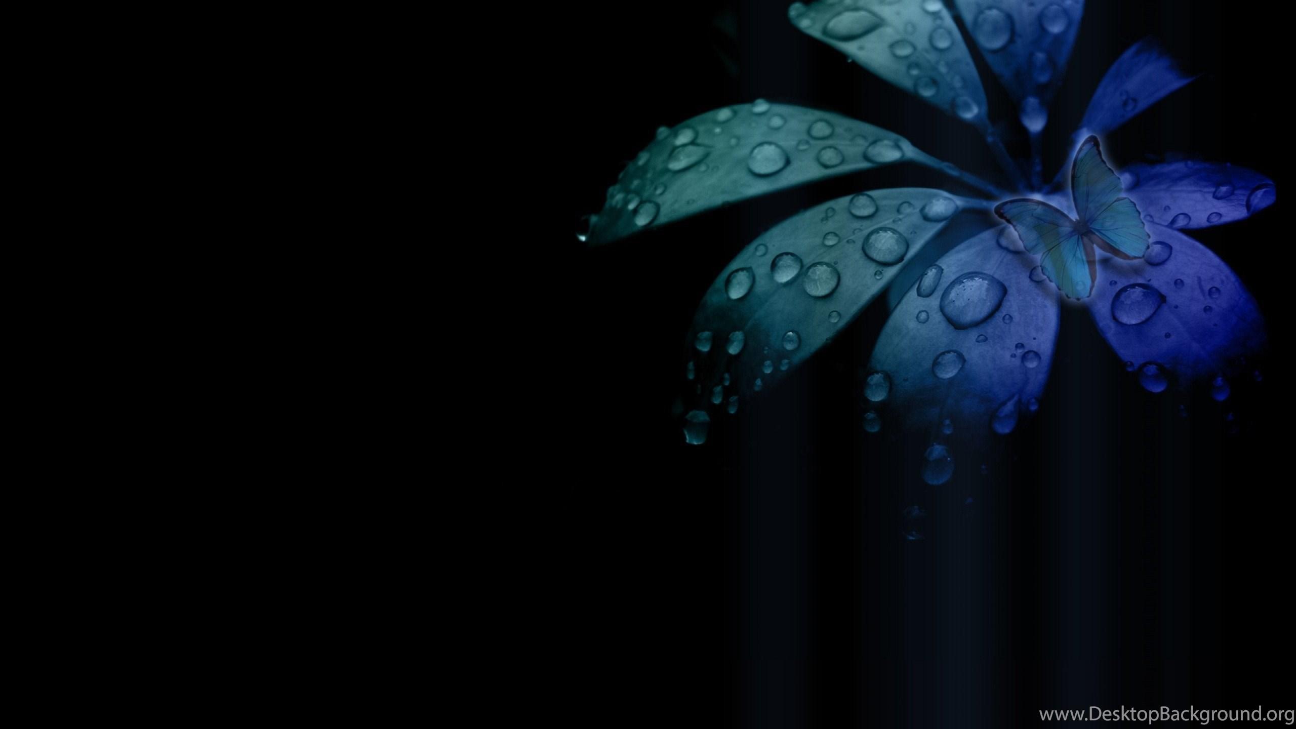 High Resolution Black Flower Desktop Wallpapers Hd 3 Full Size Desktop Background
