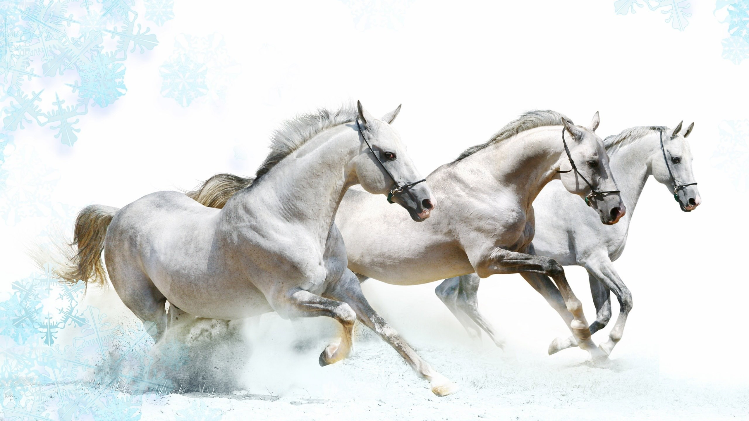 High resolution beautiful animal white horses wallpapers hd 10 netbook voltagebd Image collections