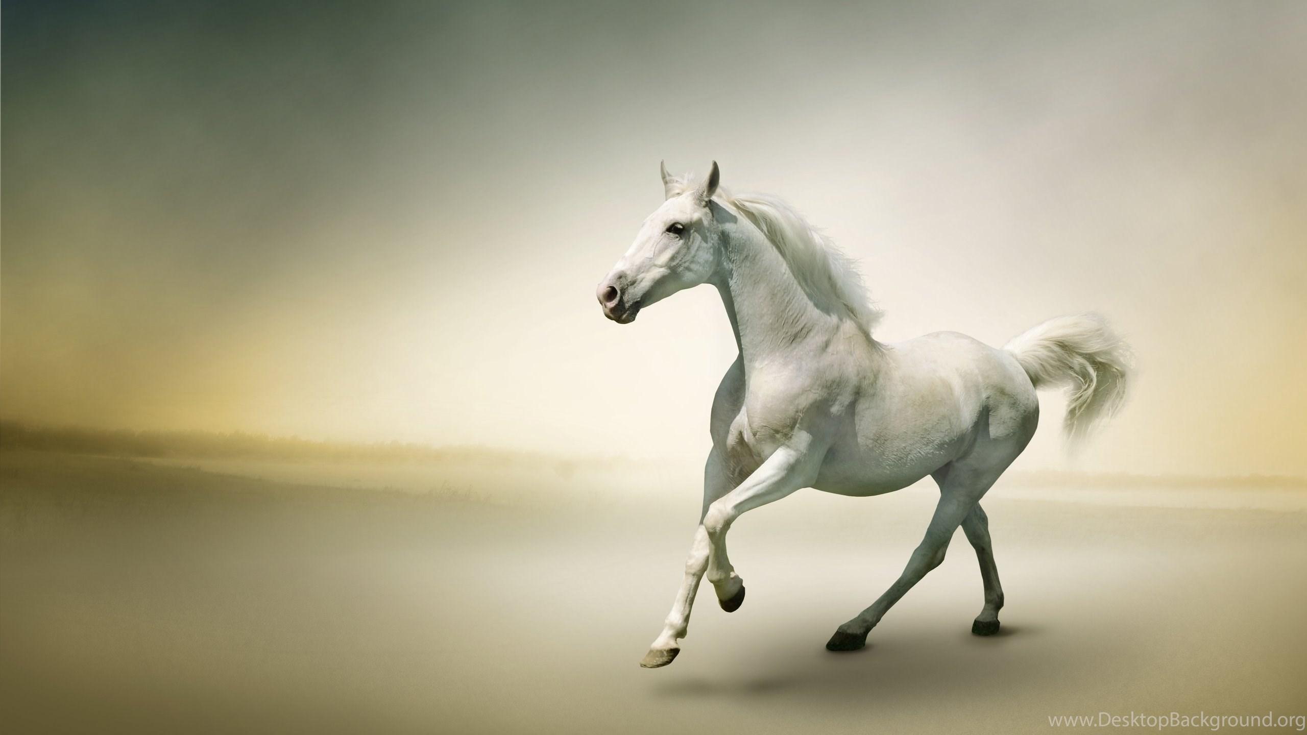 Free horses wallpapers hd toptenpack desktop background netbook voltagebd Image collections