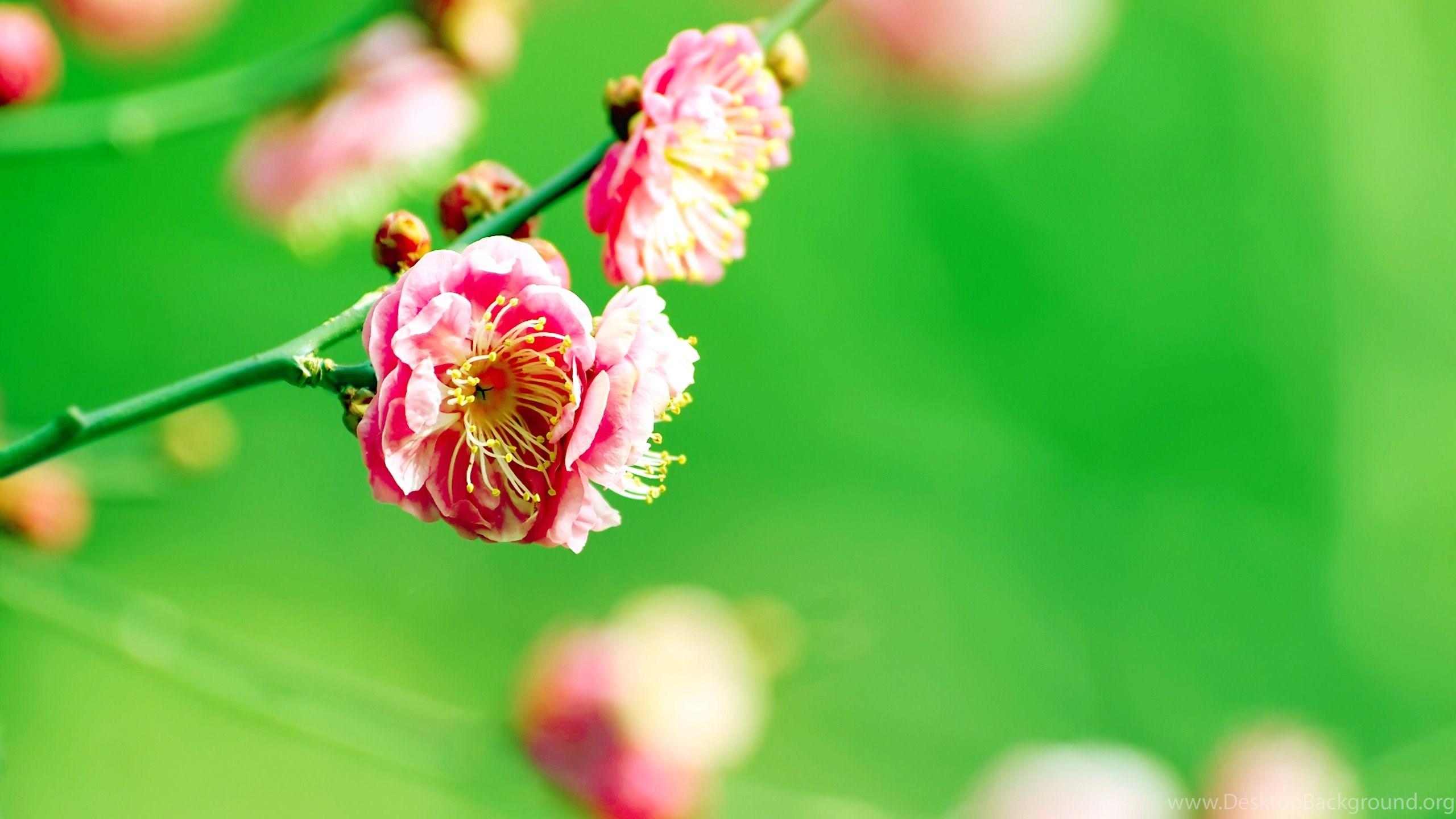 Spring flowers wallpapers desktop background netbook mightylinksfo