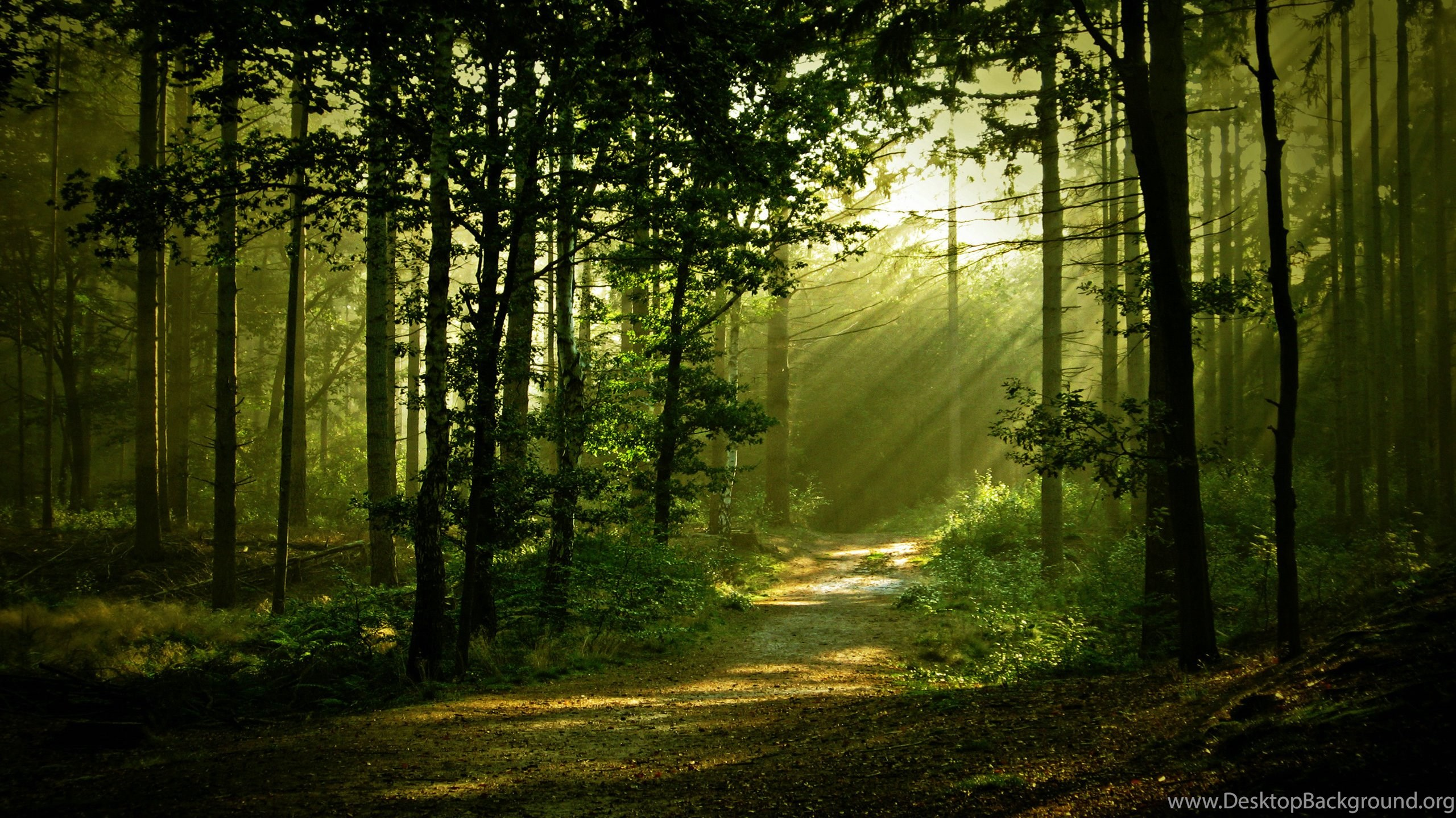 14 morning forest scenery hd wallpapers forest scenery wallpapers